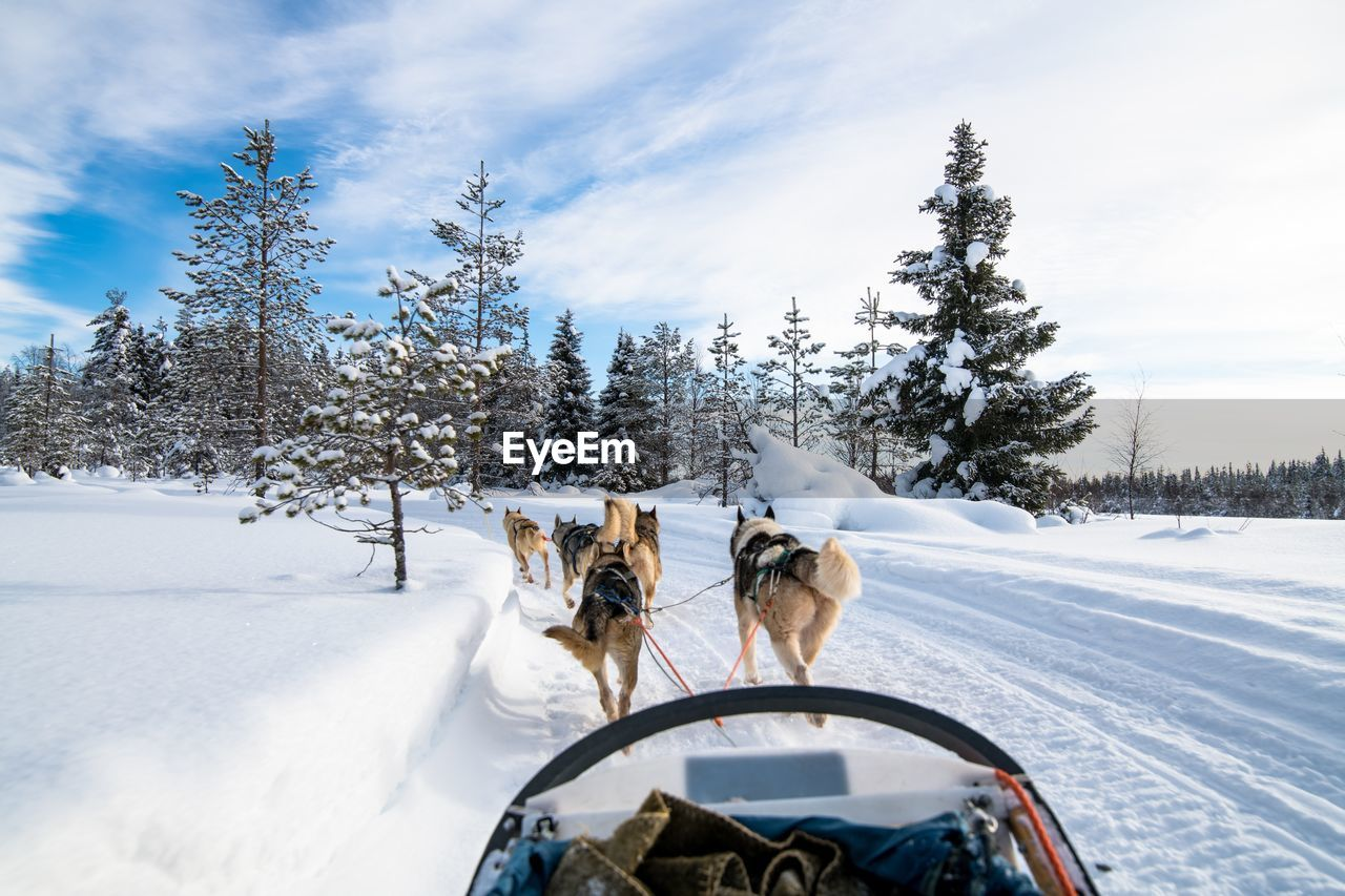 Rear View Of Sled Dogs On Snow Against Sky