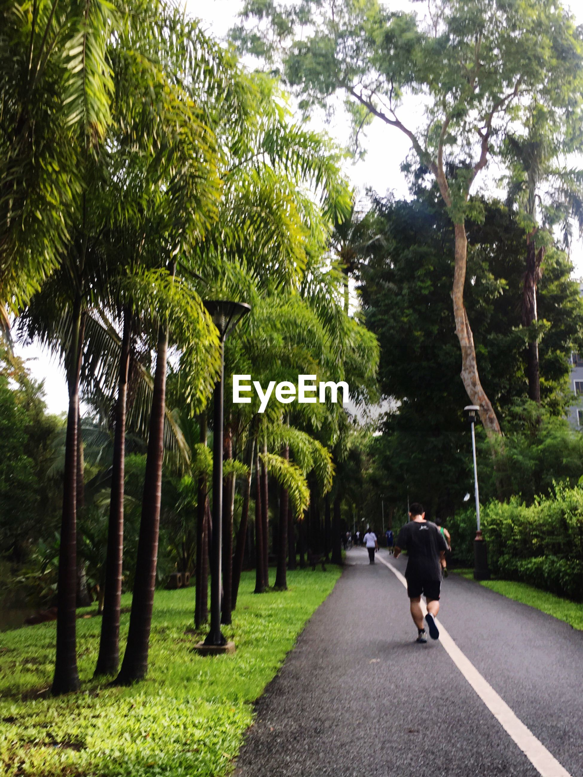 tree, walking, growth, full length, road, one person, rear view, the way forward, nature, real people, outdoors, day, palm tree, grass, men, women, people