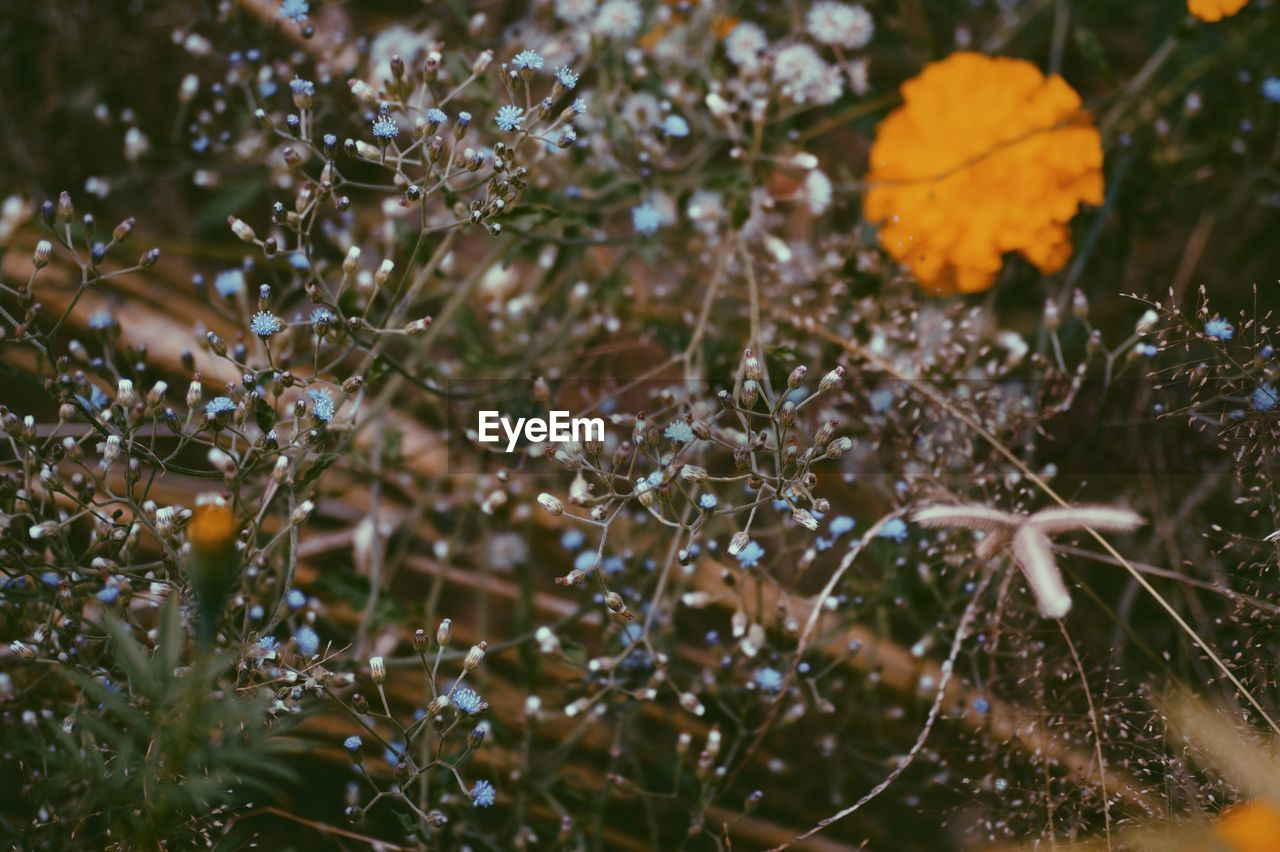 nature, beauty in nature, growth, no people, outdoors, selective focus, day, freshness, fragility, close-up, plant, cold temperature, flower, water, tree