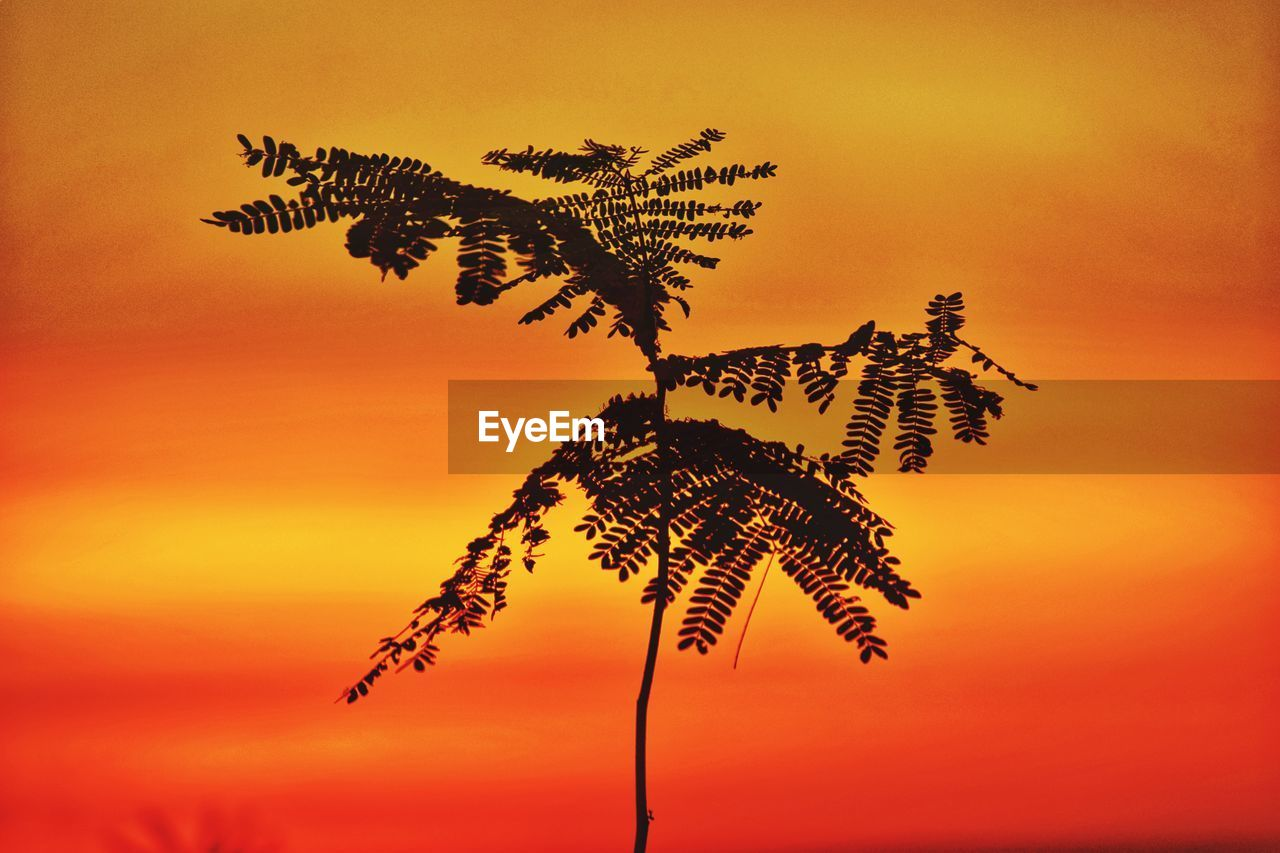 sunset, plant, sky, beauty in nature, orange color, growth, no people, nature, tranquility, tree, scenics - nature, silhouette, tranquil scene, idyllic, leaf, cloud - sky, outdoors, tropical climate, plant part, environment, coconut palm tree, palm leaf