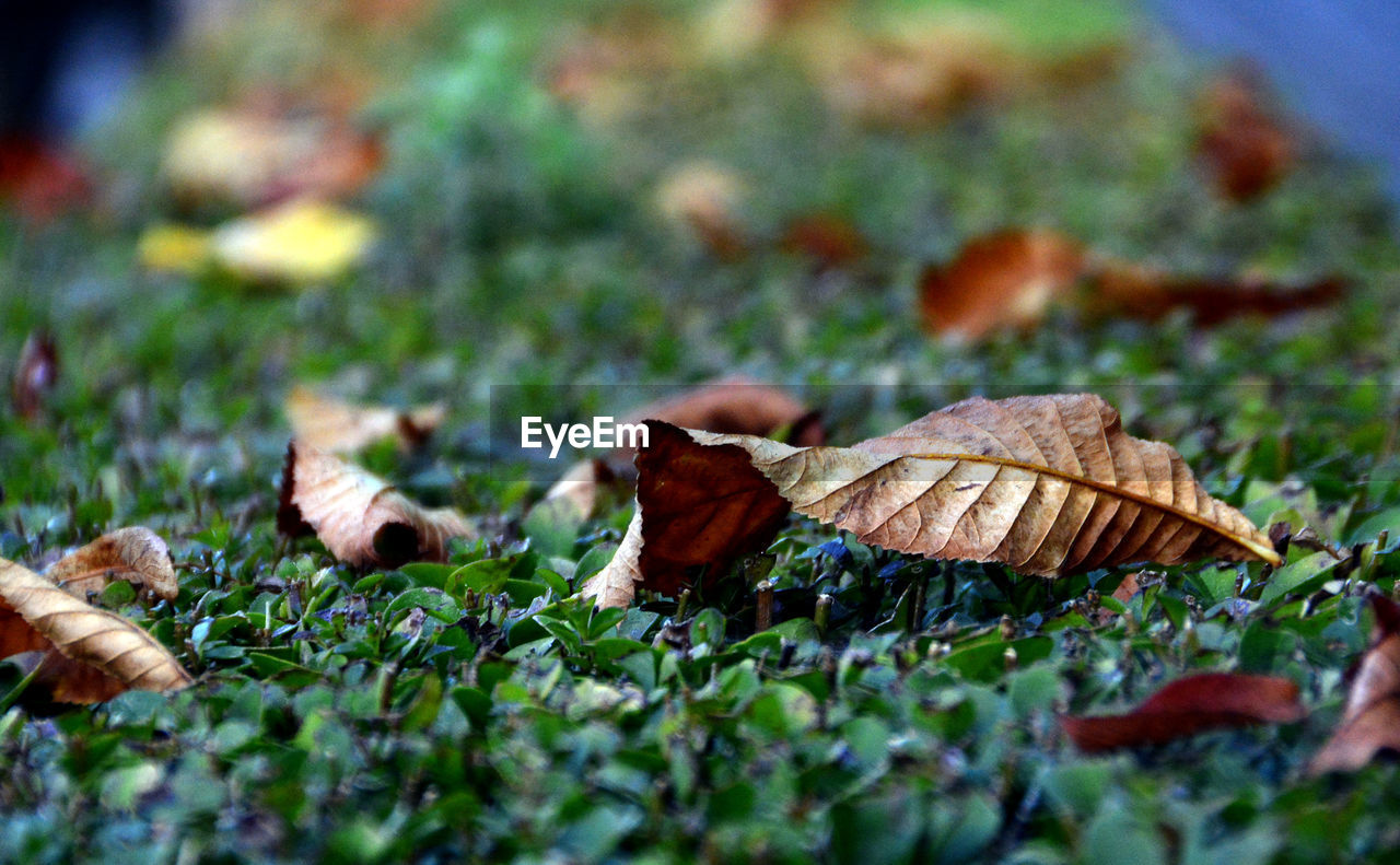 leaf, selective focus, nature, dry, autumn, day, outdoors, change, close-up, no people, fragility, grass, beauty in nature