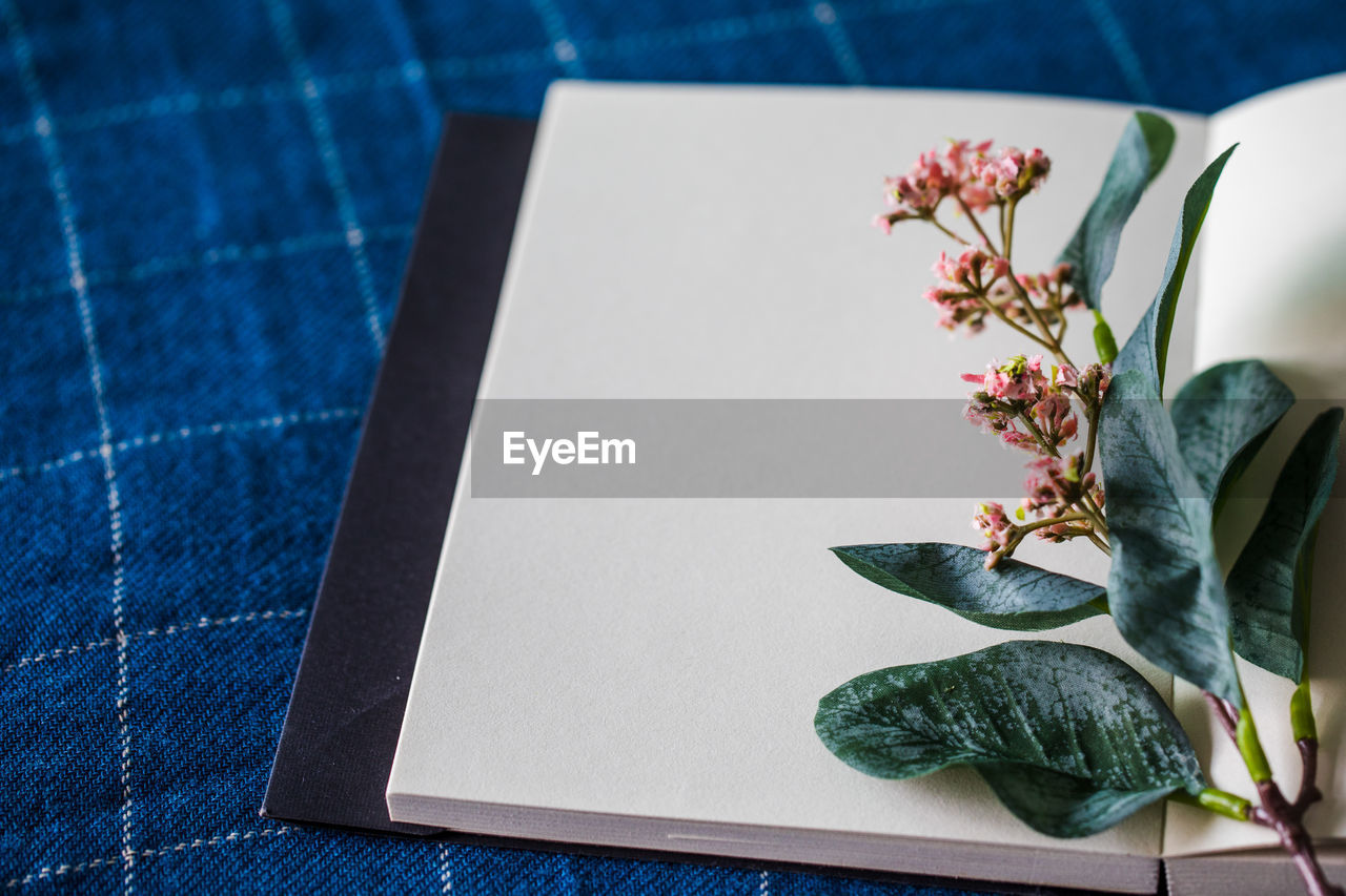 HIGH ANGLE VIEW OF POTTED PLANT ON TABLE IN SUNLIGHT