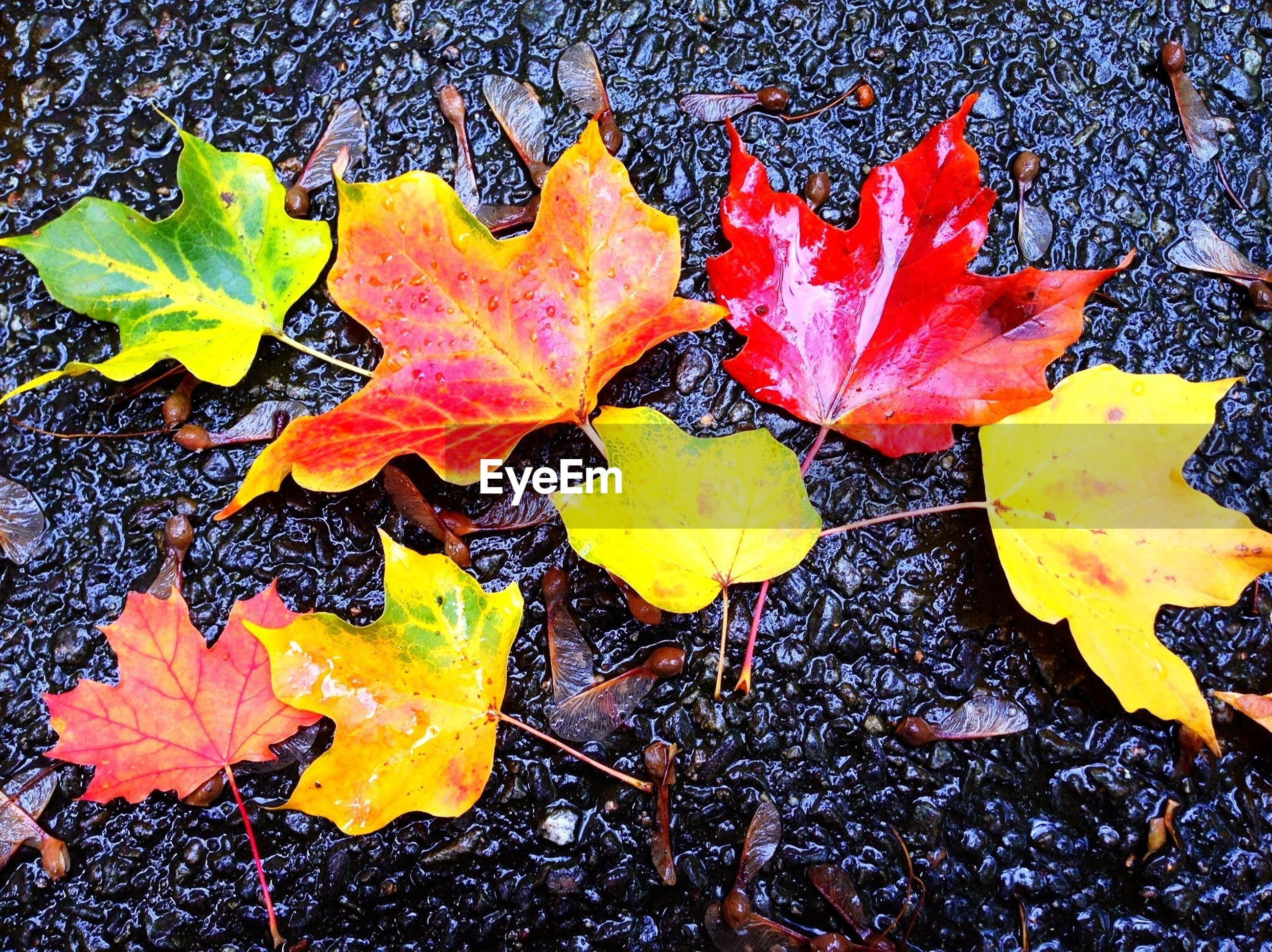 Close-up of autumnal leaves on ground