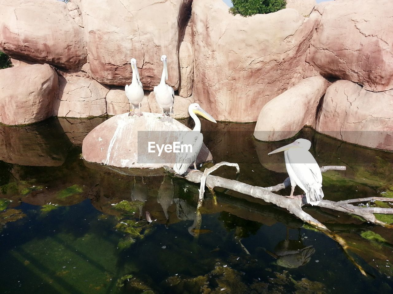 water, animals in the wild, animal themes, bird, nature, reflection, day, animal wildlife, high angle view, rock - object, no people, lake, outdoors, beauty in nature