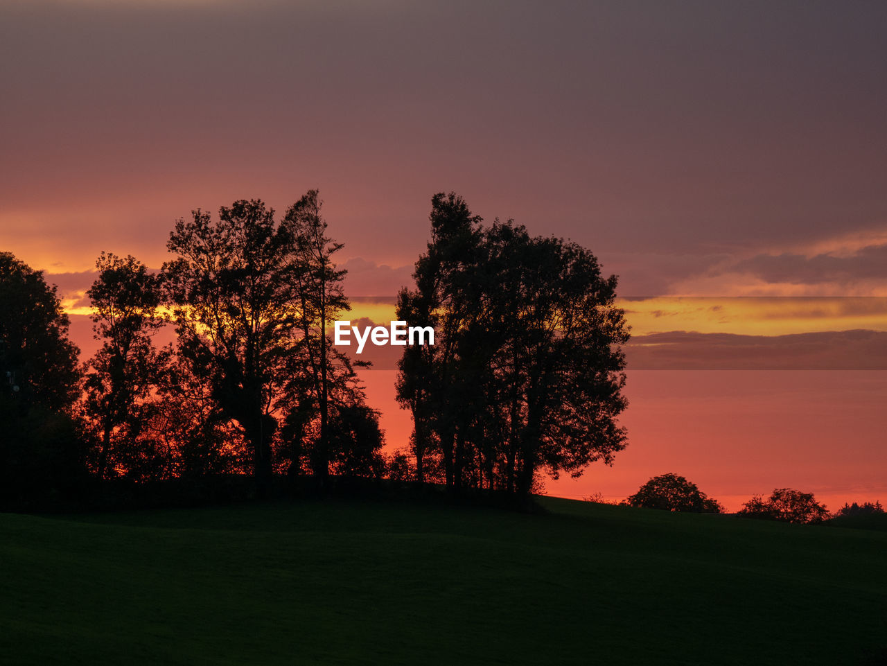 sky, sunset, tree, plant, beauty in nature, tranquil scene, scenics - nature, tranquility, orange color, field, idyllic, silhouette, environment, grass, no people, nature, landscape, non-urban scene, land, growth, outdoors