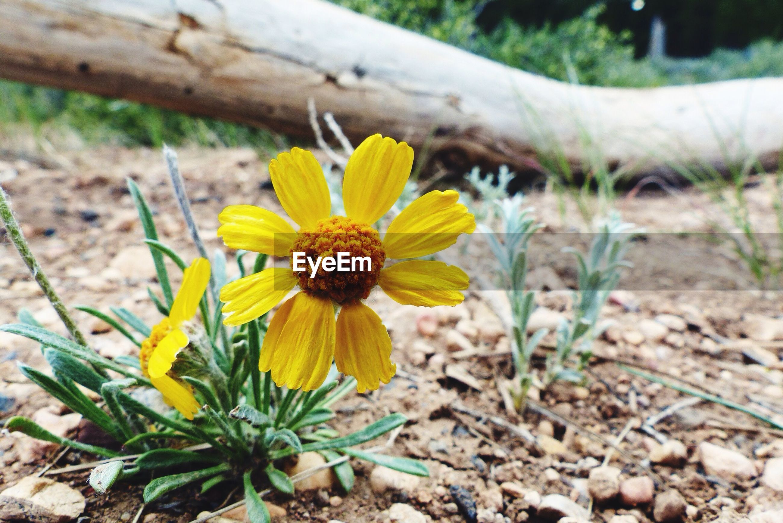 Bryce Canyon Beautiful Flowers Flowers