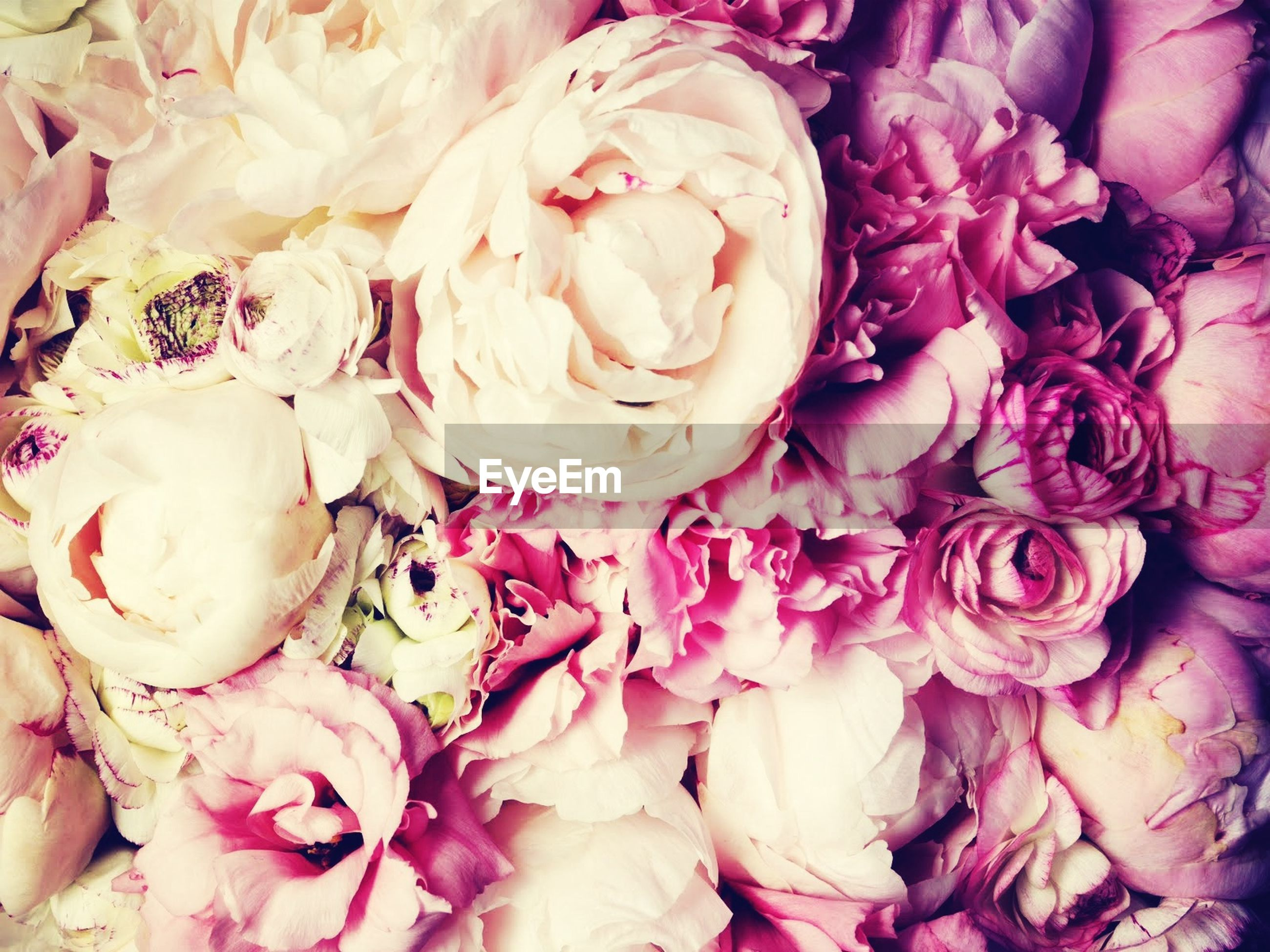 flower, freshness, petal, rose - flower, full frame, fragility, pink color, flower head, indoors, beauty in nature, backgrounds, bouquet, close-up, nature, rose, high angle view, bunch of flowers, variation, abundance, no people