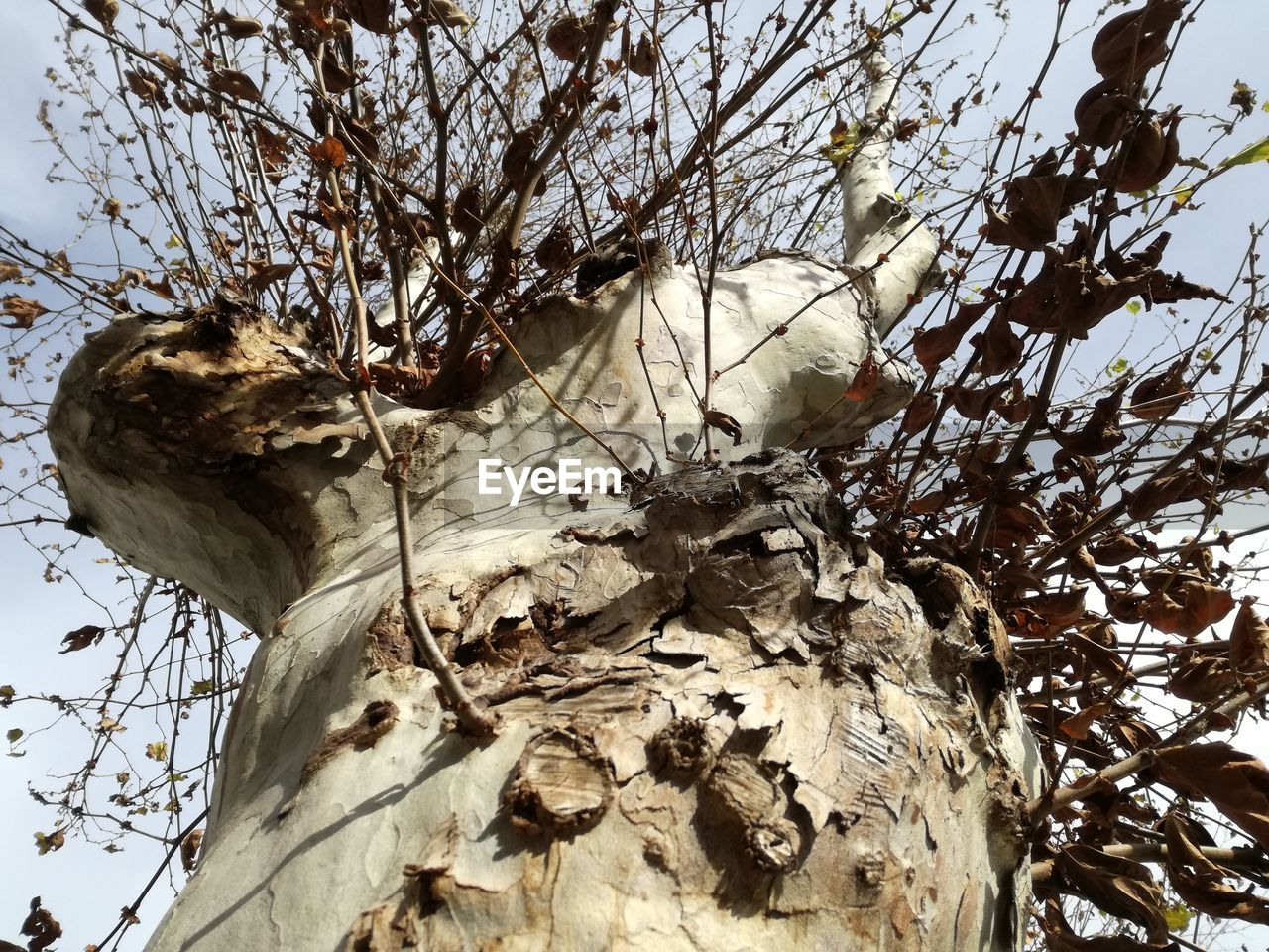 tree, plant, day, nature, no people, branch, dry, outdoors, close-up, low angle view, growth, land, tree trunk, trunk, beauty in nature, plant part, bark, fragility, focus on foreground, leaf, dead plant, dried, wilted plant