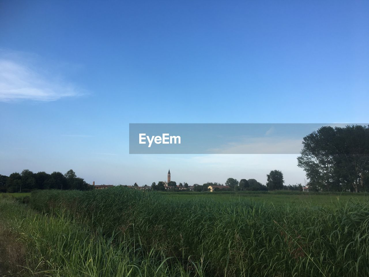 plant, sky, field, landscape, land, environment, growth, grass, scenics - nature, tree, tranquility, tranquil scene, agriculture, beauty in nature, rural scene, nature, green color, day, farm, crop, no people, outdoors