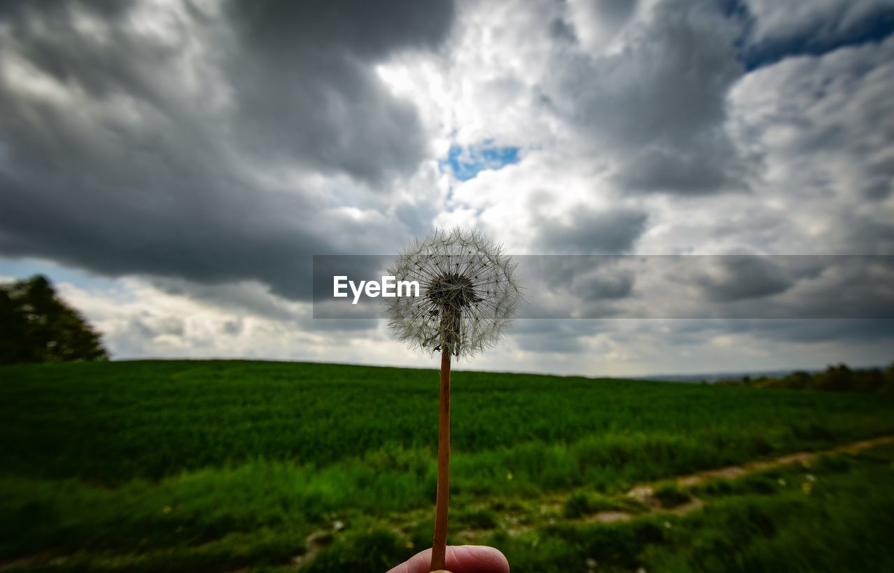 cloud - sky, plant, sky, beauty in nature, land, field, nature, growth, dandelion, environment, landscape, flower, flowering plant, fragility, one person, overcast, freshness, storm cloud, grass, outdoors, flower head, finger