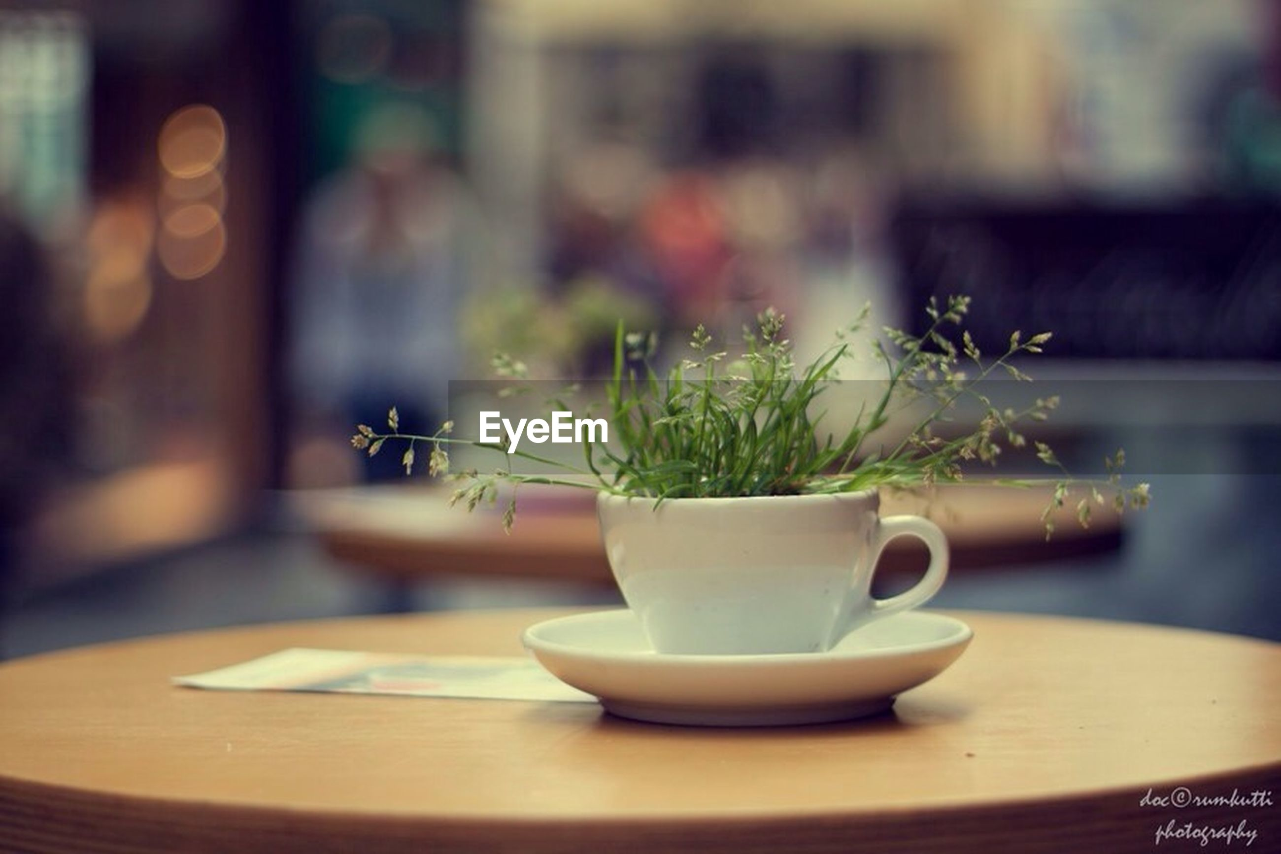 indoors, potted plant, focus on foreground, plant, flower, selective focus, window, home interior, close-up, growth, table, house, vase, built structure, no people, architecture, day, chair, hanging, nature