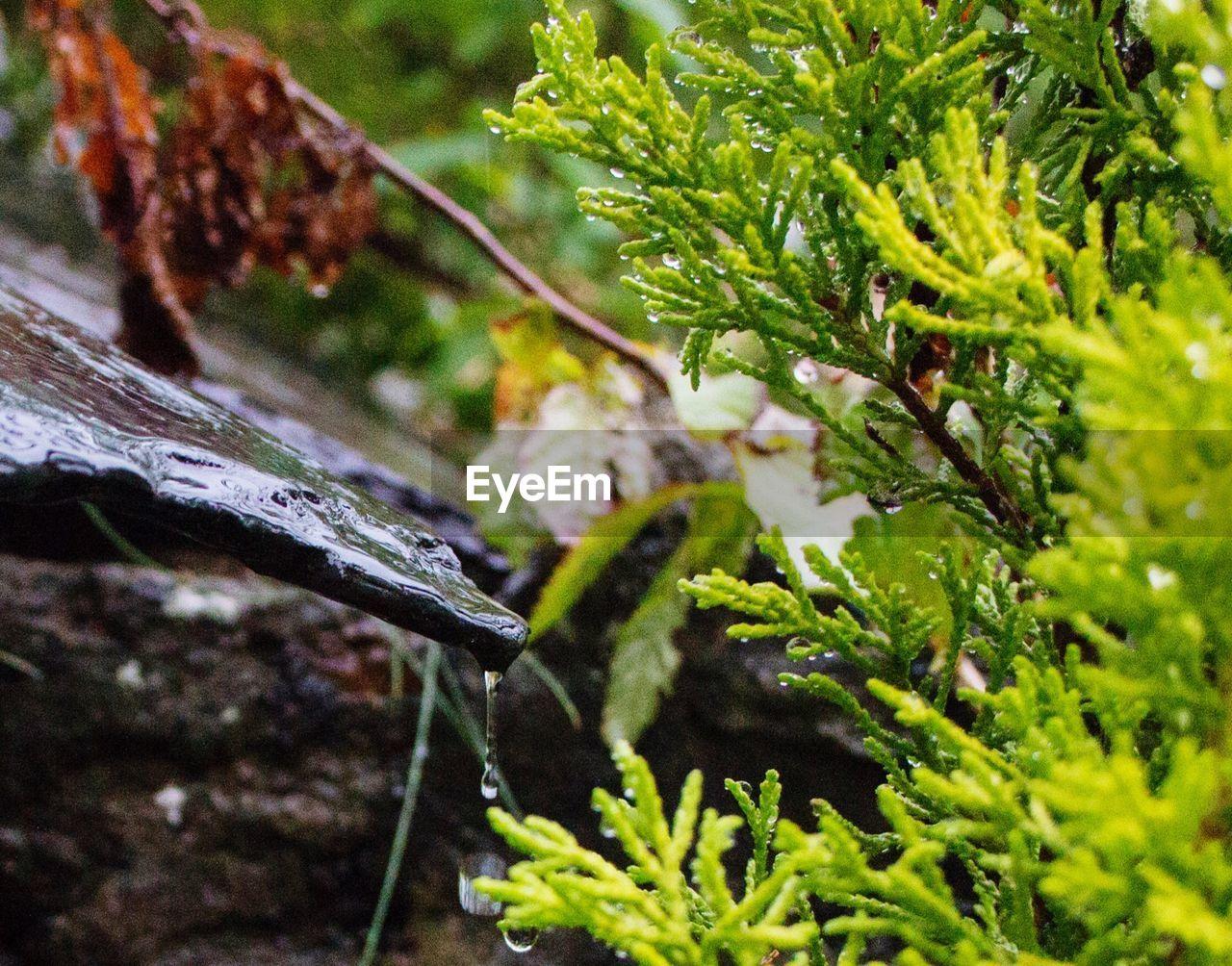 Plants and rock during rainy season