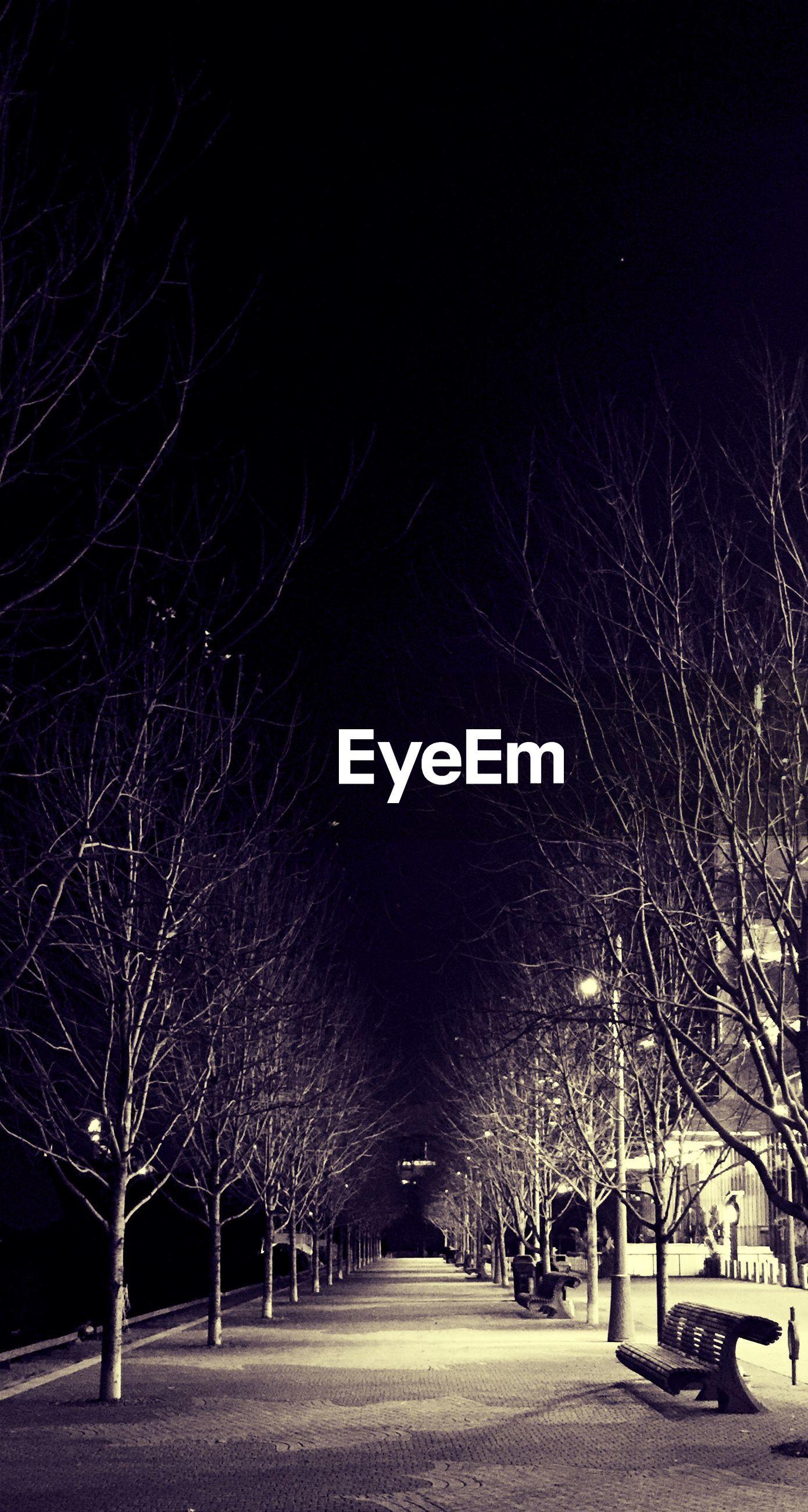 ROAD ALONG TREES AT NIGHT