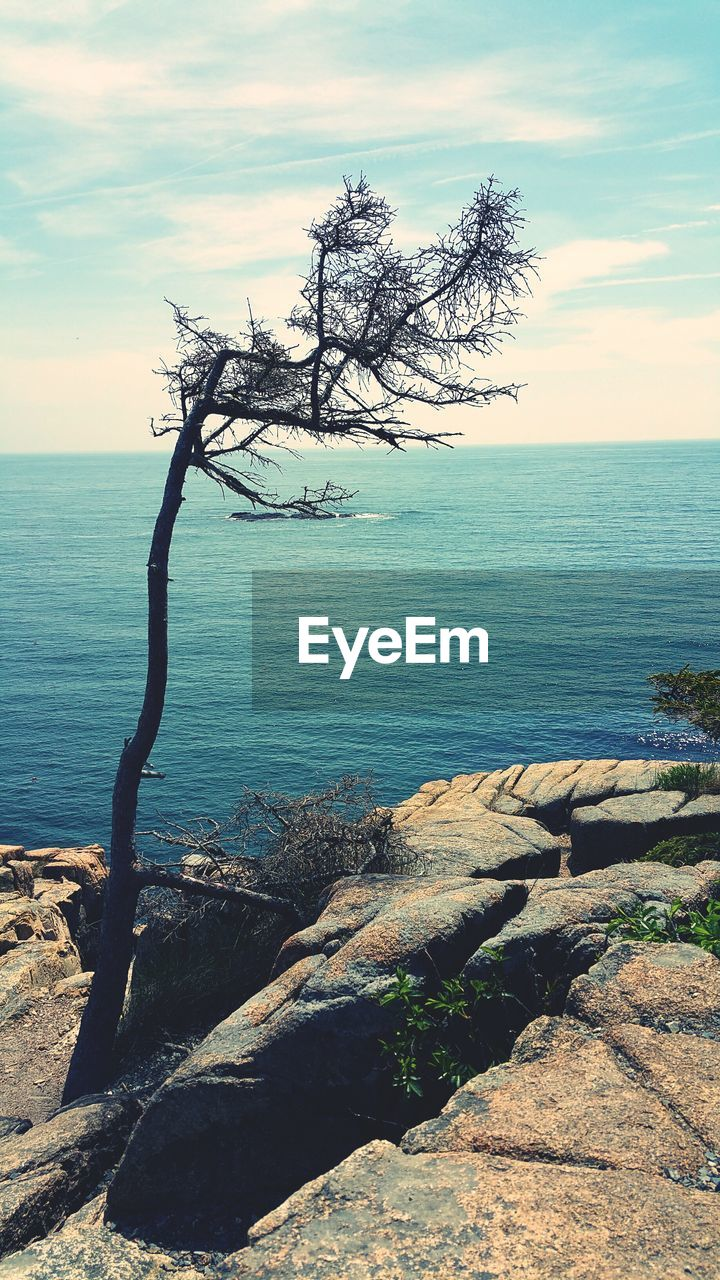 sea, tranquil scene, tranquility, water, scenics, beauty in nature, nature, horizon over water, tree, sky, tree trunk, outdoors, no people, branch, day, lone, bare tree