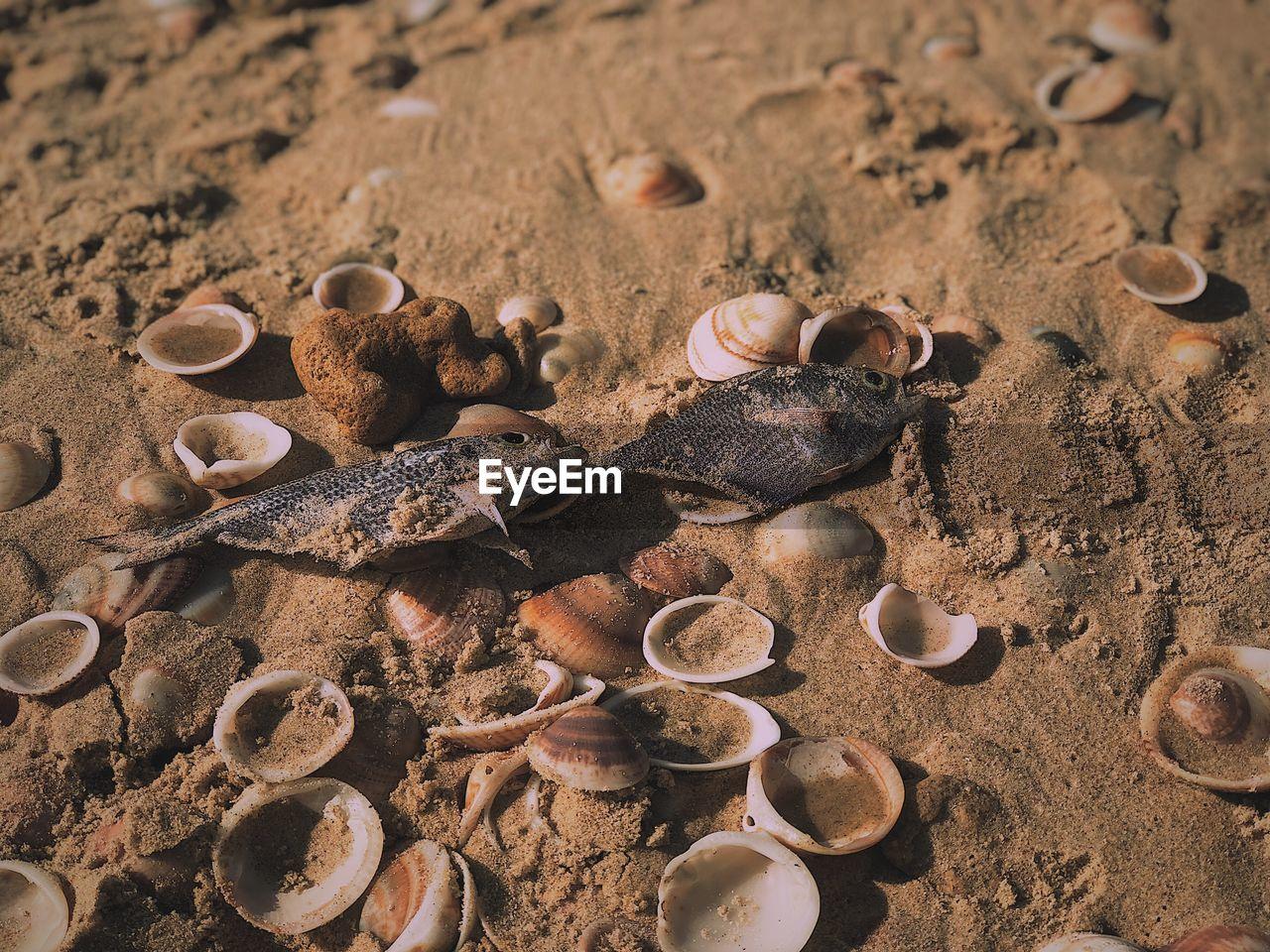 High angle view of fish on sand