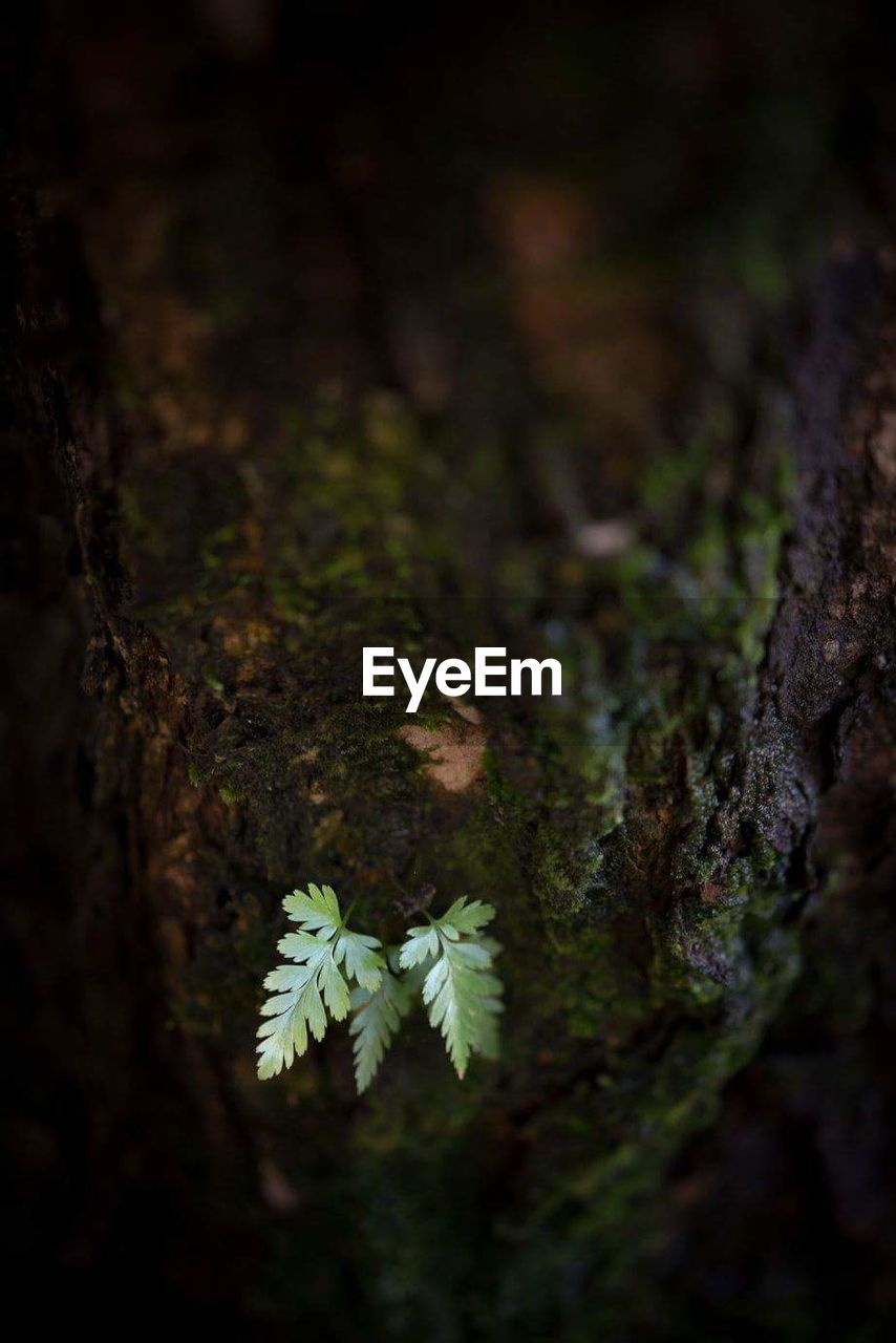 tree trunk, growth, nature, moss, selective focus, no people, close-up, outdoors, tree, leaf, day, beauty in nature, forest, plant, mushroom, fungus, fragility, freshness, toadstool