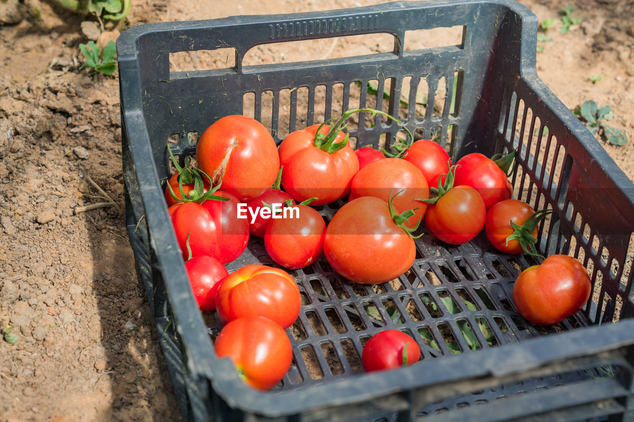HIGH ANGLE VIEW OF TOMATOES AND FRUITS IN BASKET