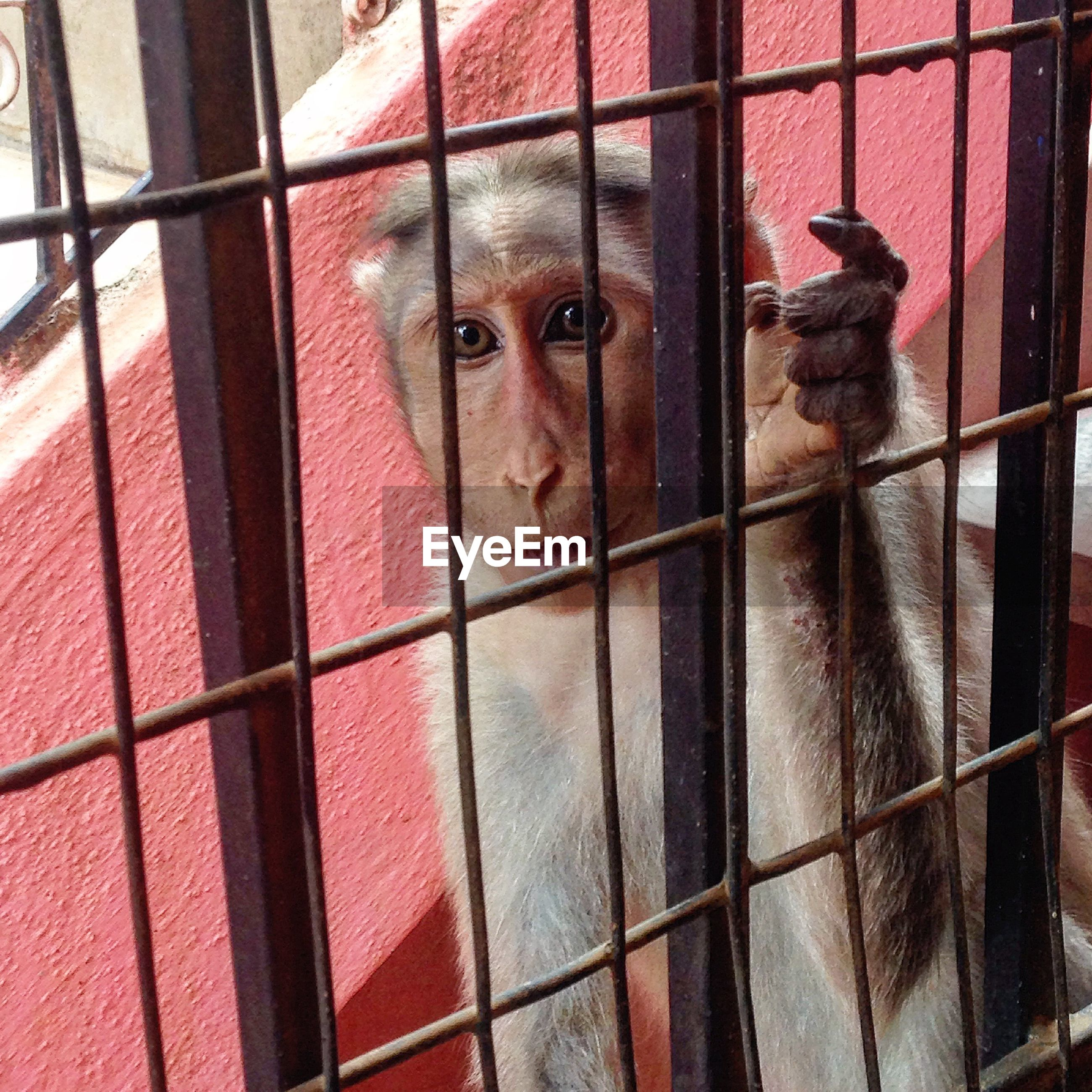 Close-up of monkey by metal grate