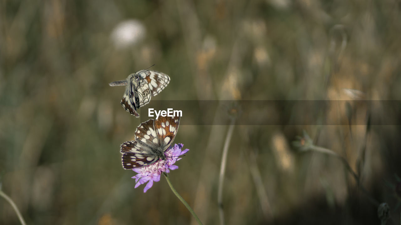 insect, invertebrate, flower, animal themes, animals in the wild, animal, flowering plant, plant, animal wildlife, beauty in nature, fragility, one animal, growth, freshness, close-up, vulnerability, petal, flower head, nature, animal wing, pollination, no people, butterfly - insect, outdoors, purple