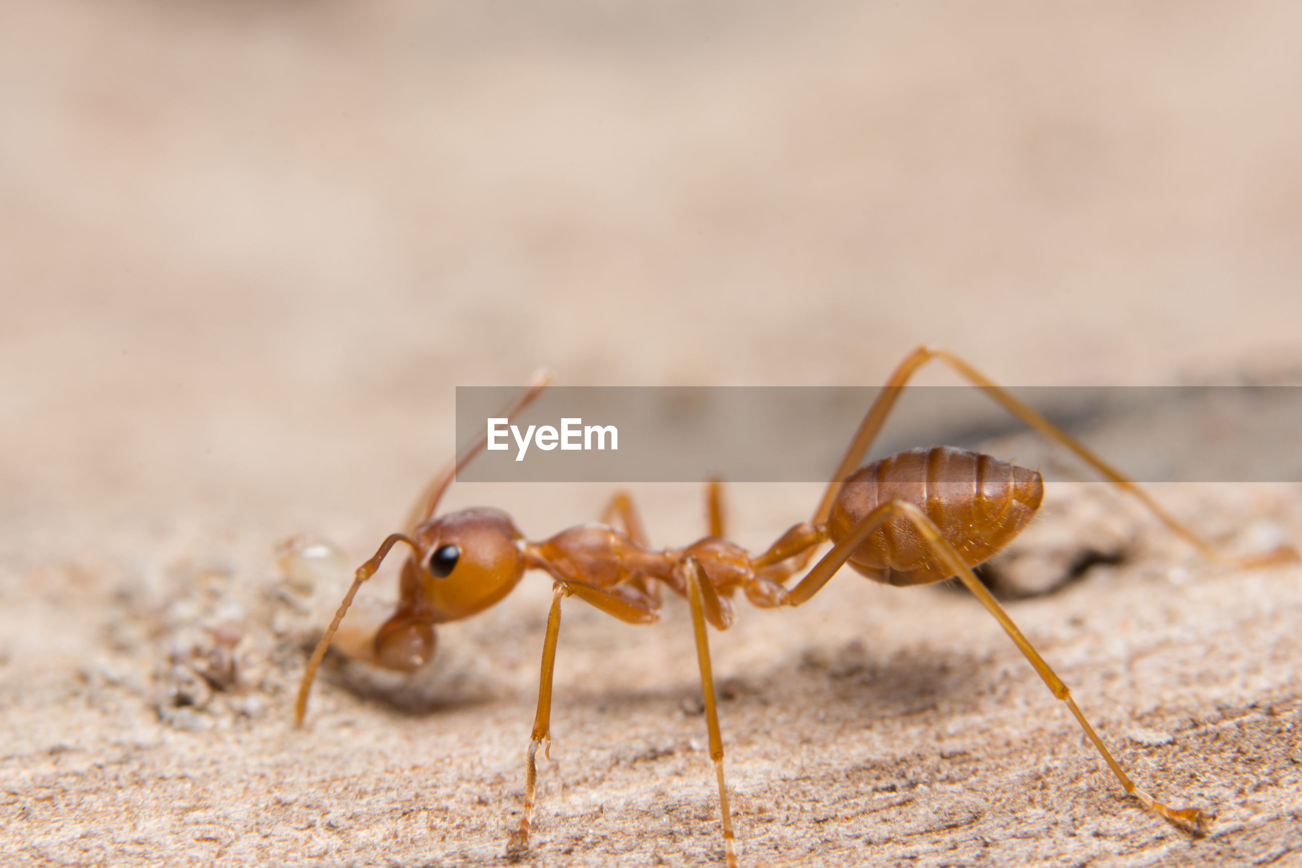 Close-up of ant on wood