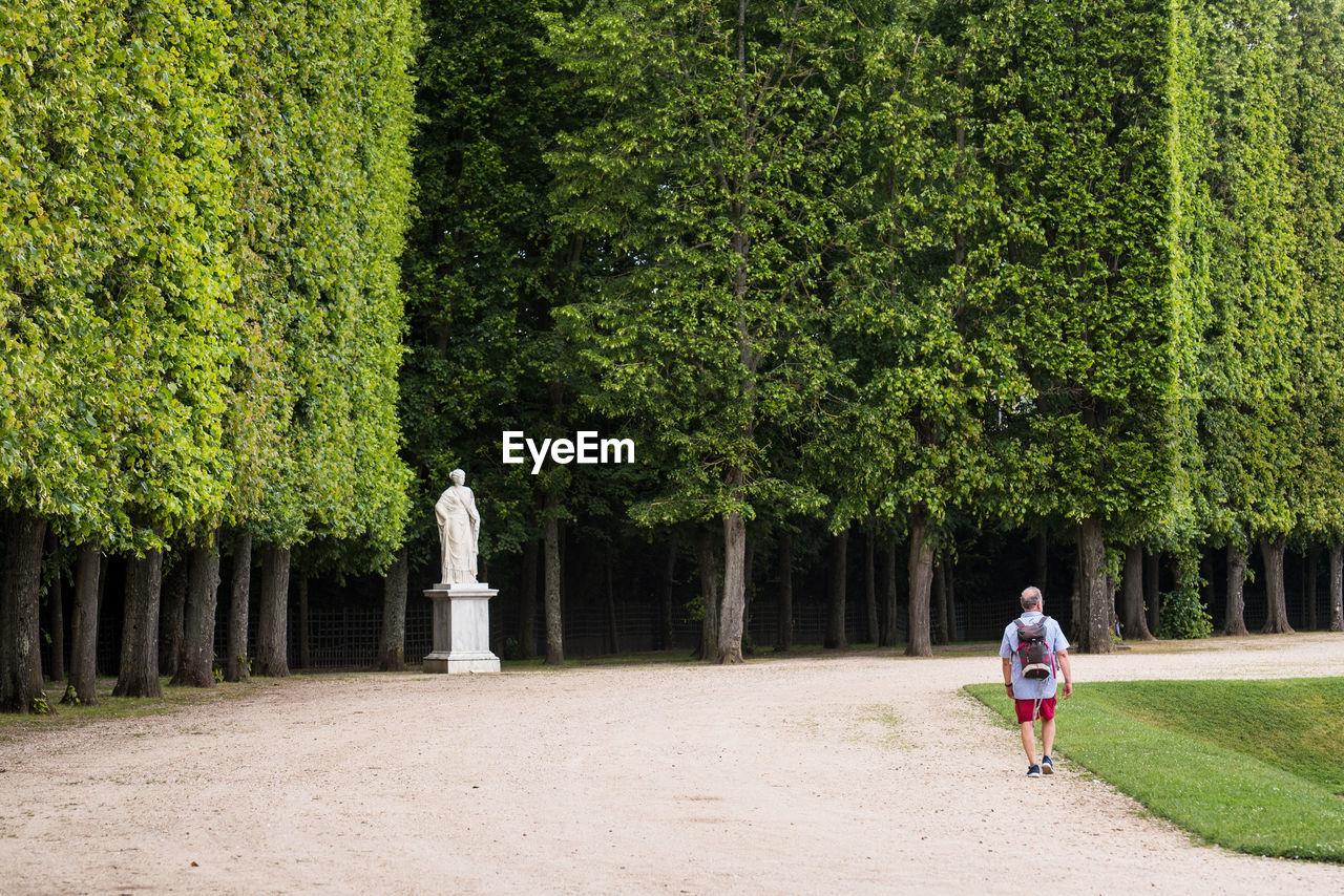 Rear View Of Man Walking On Road In Park