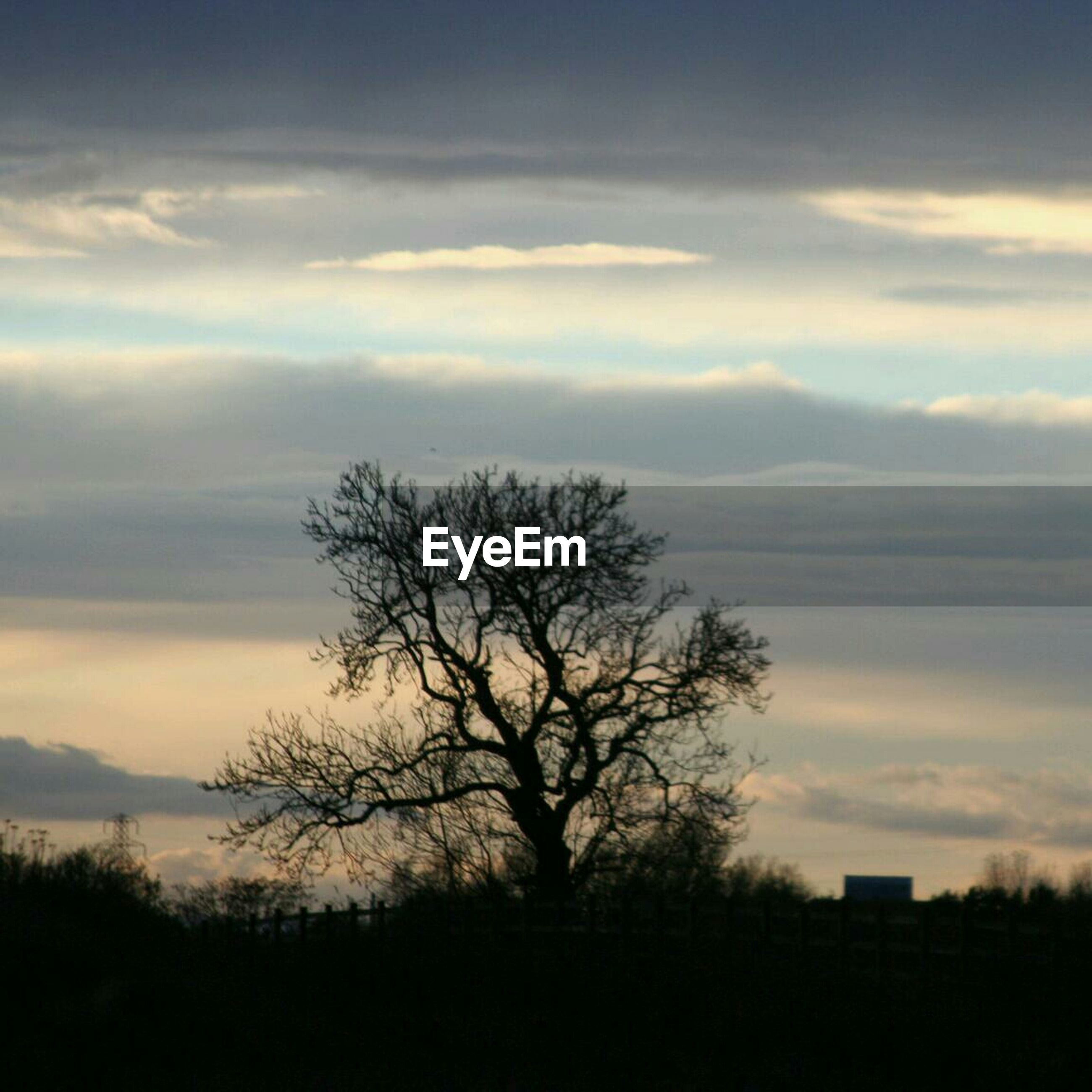 Silhouette tree with sky in background