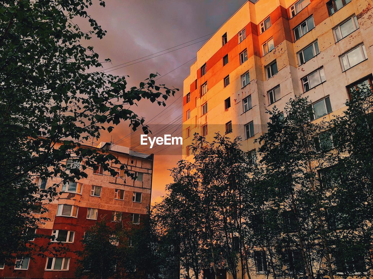 building exterior, tree, architecture, built structure, plant, sky, building, nature, no people, city, residential district, low angle view, cloud - sky, sunset, outdoors, orange color, growth, window, day, branch, apartment