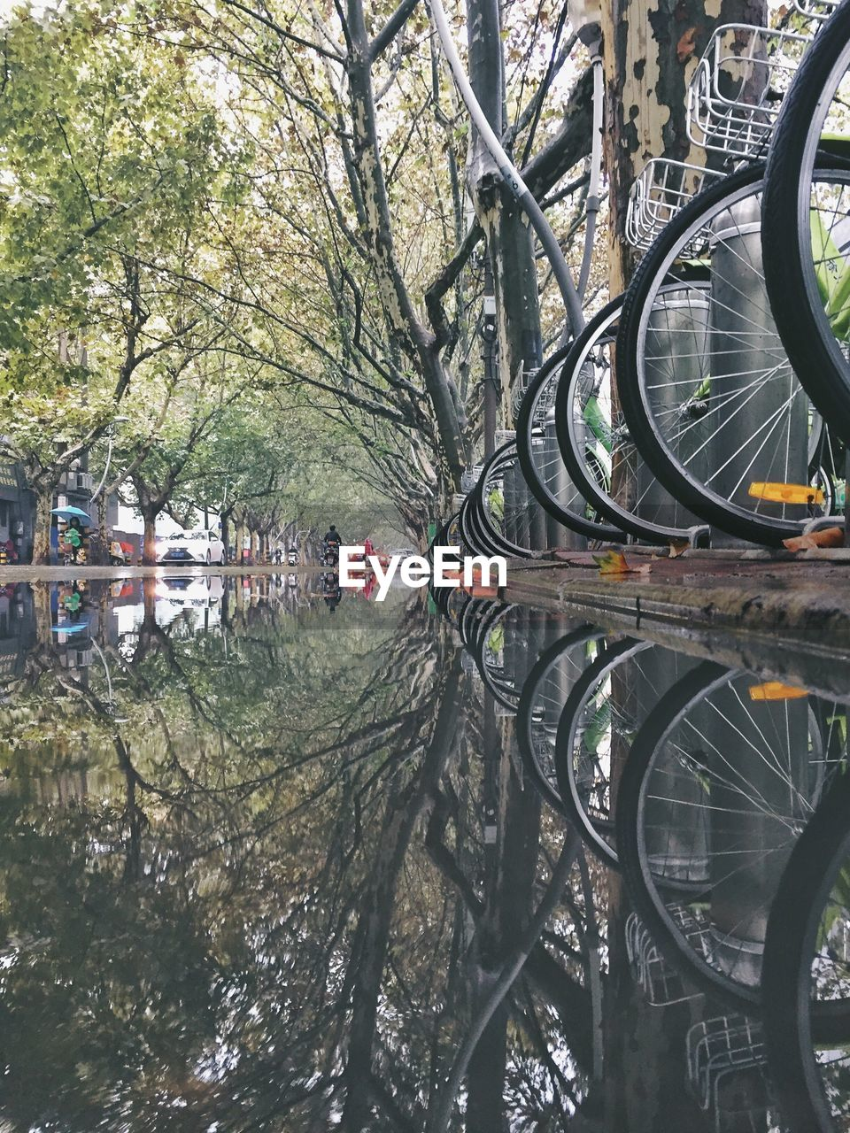 Reflection Of Bare Trees And Bicycle On Water