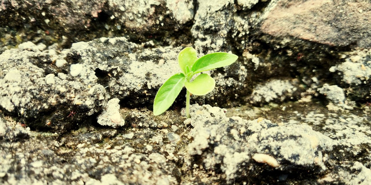 plant part, leaf, plant, growth, nature, green color, close-up, beginnings, no people, day, seedling, beauty in nature, fragility, new life, outdoors, selective focus, vulnerability, freshness, small, textured