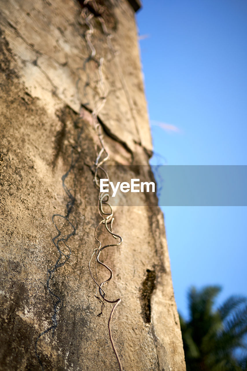 low angle view, sky, focus on foreground, tree, nature, day, plant, no people, tree trunk, trunk, close-up, blue, clear sky, textured, sunlight, outdoors, selective focus, architecture, metal, wall - building feature