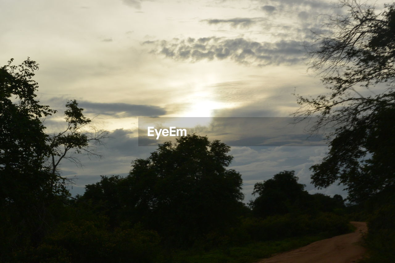 tree, plant, cloud - sky, sky, beauty in nature, tranquility, tranquil scene, nature, no people, growth, scenics - nature, outdoors, silhouette, non-urban scene, day, low angle view, land, sunset, forest, environment