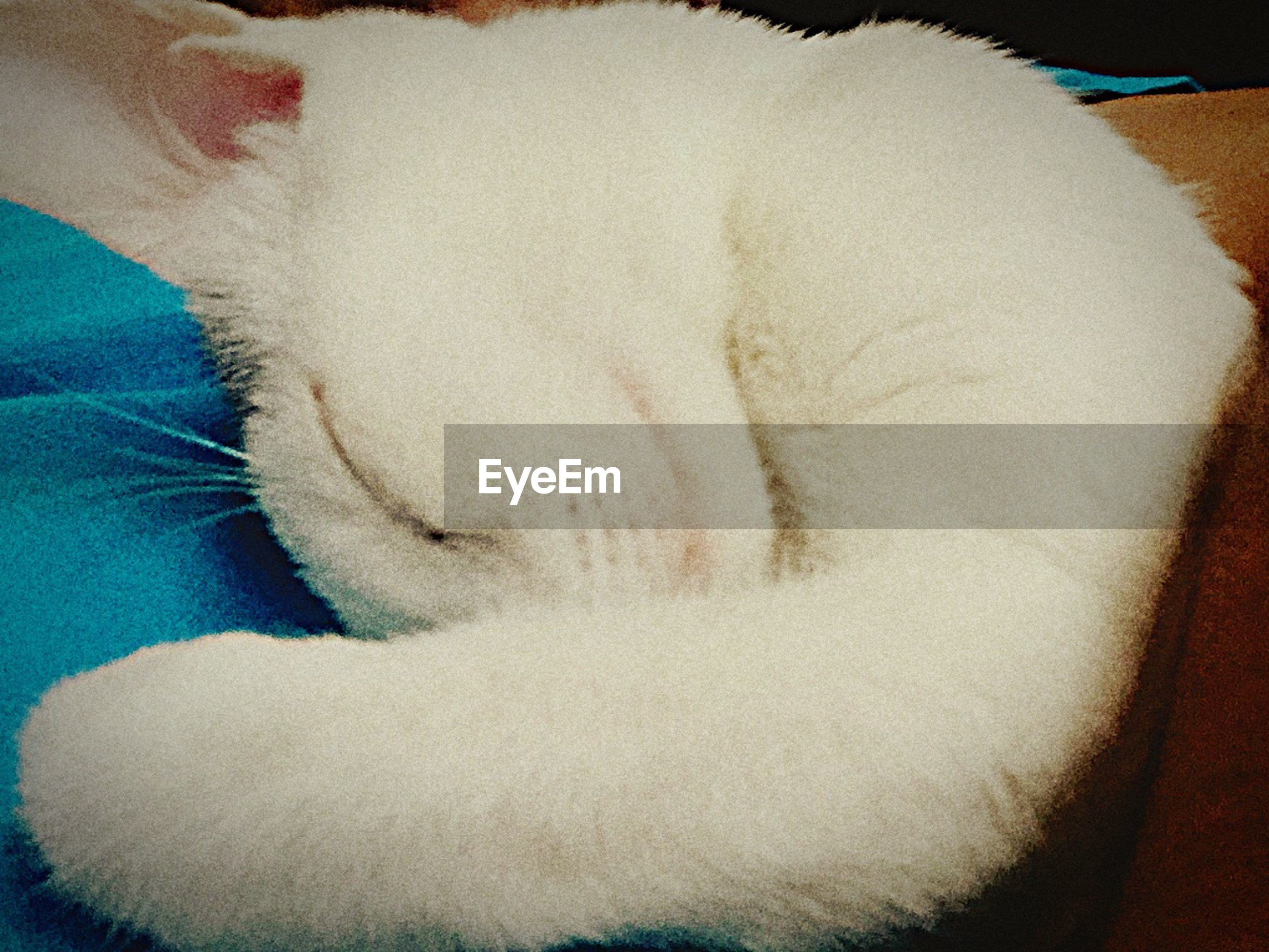 indoors, bed, relaxation, sleeping, high angle view, domestic animals, pets, resting, lying down, close-up, home interior, sheet, blanket, bedroom, part of, white color, one animal