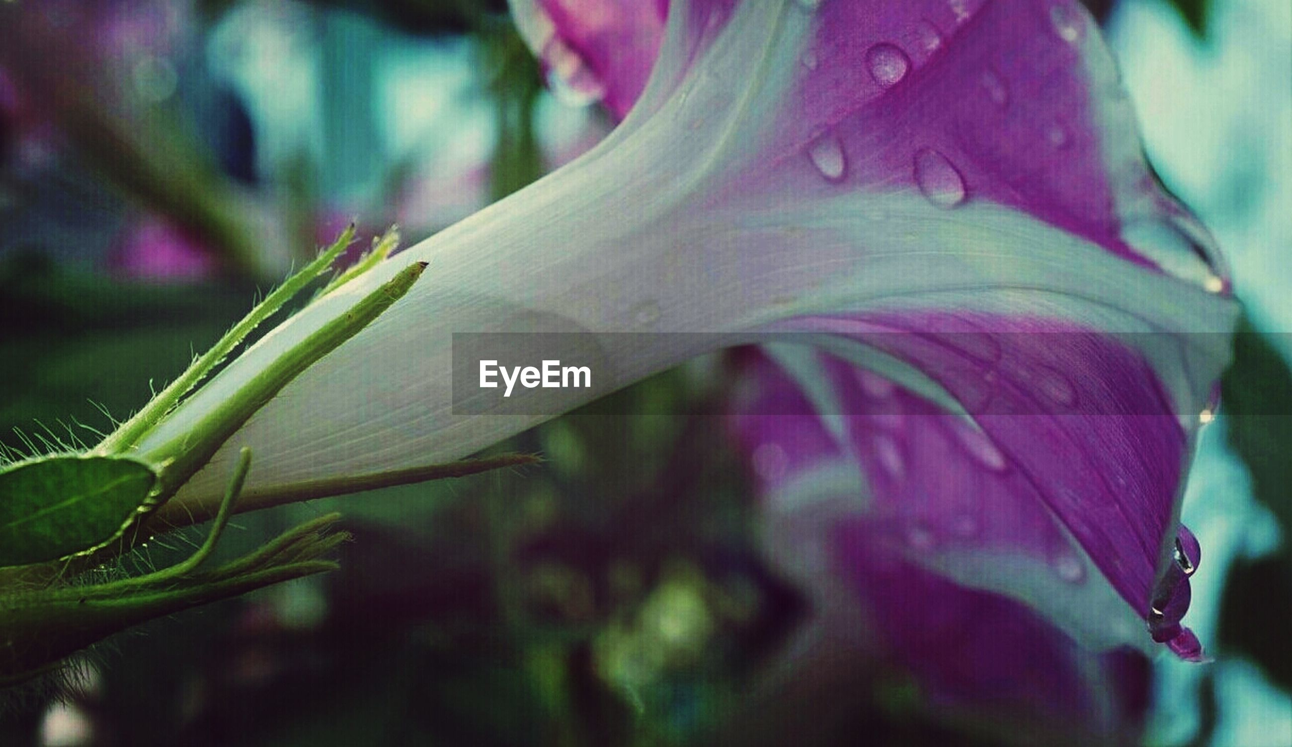 flower, close-up, growth, fragility, freshness, focus on foreground, plant, beauty in nature, petal, nature, selective focus, bud, leaf, stem, green color, flower head, outdoors, day, no people, insect