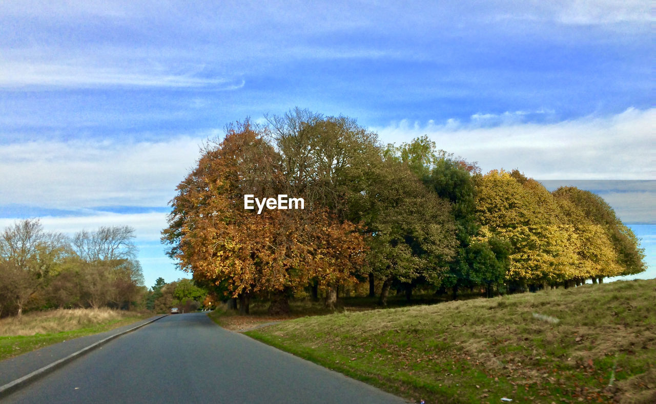 tree, nature, road, beauty in nature, sky, day, outdoors, cloud - sky, scenics, growth, tranquil scene, no people, landscape, field, transportation, tranquility, autumn, the way forward, grass