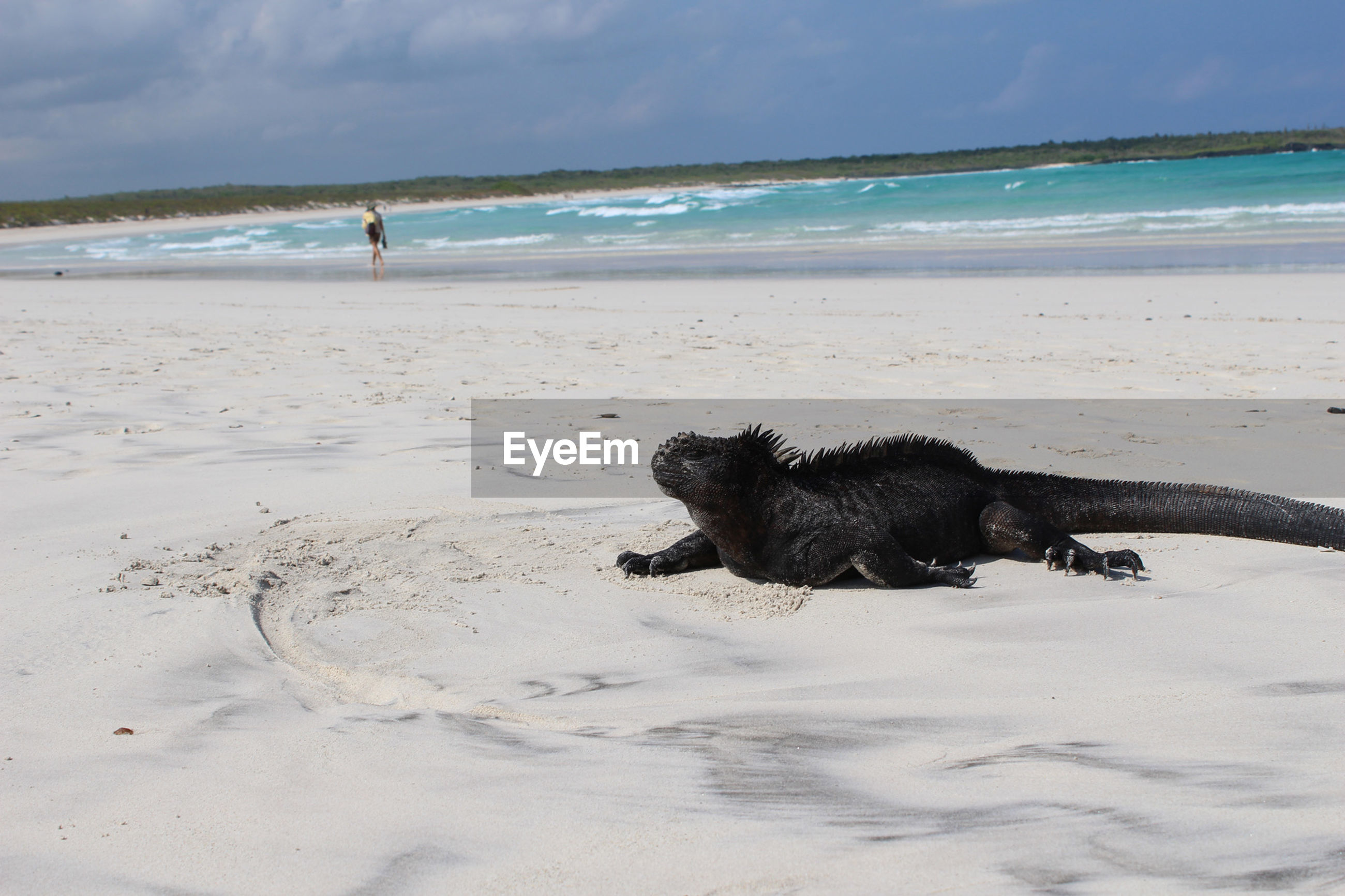 DOG PLAYING ON BEACH AGAINST SEA
