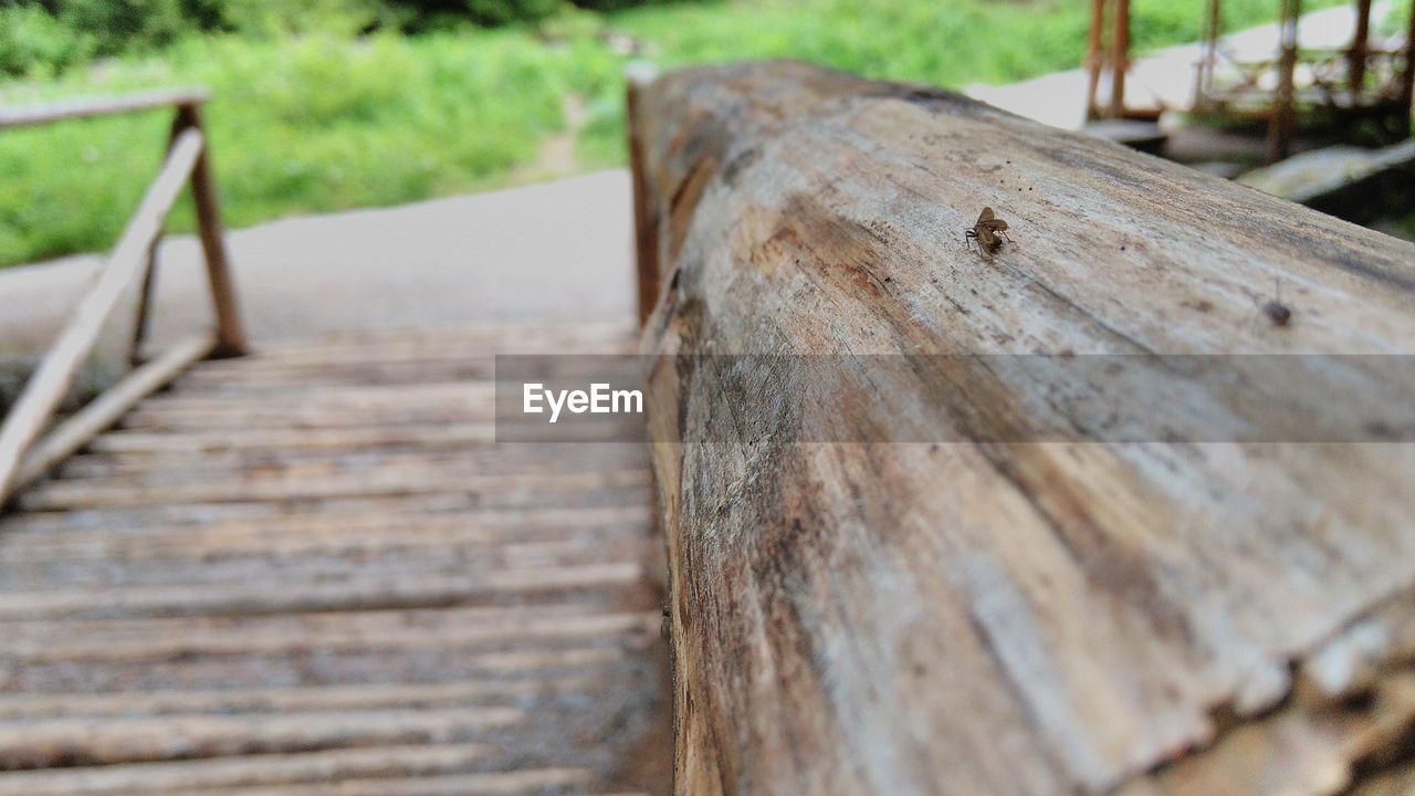 wood - material, outdoors, day, no people, close-up, nature, animal themes