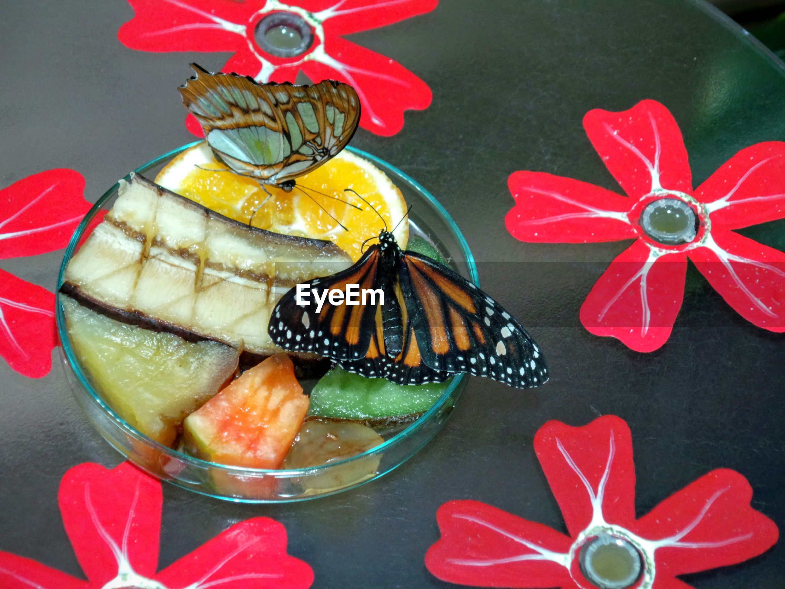 High angle view of butterflies on sliced fruits on table