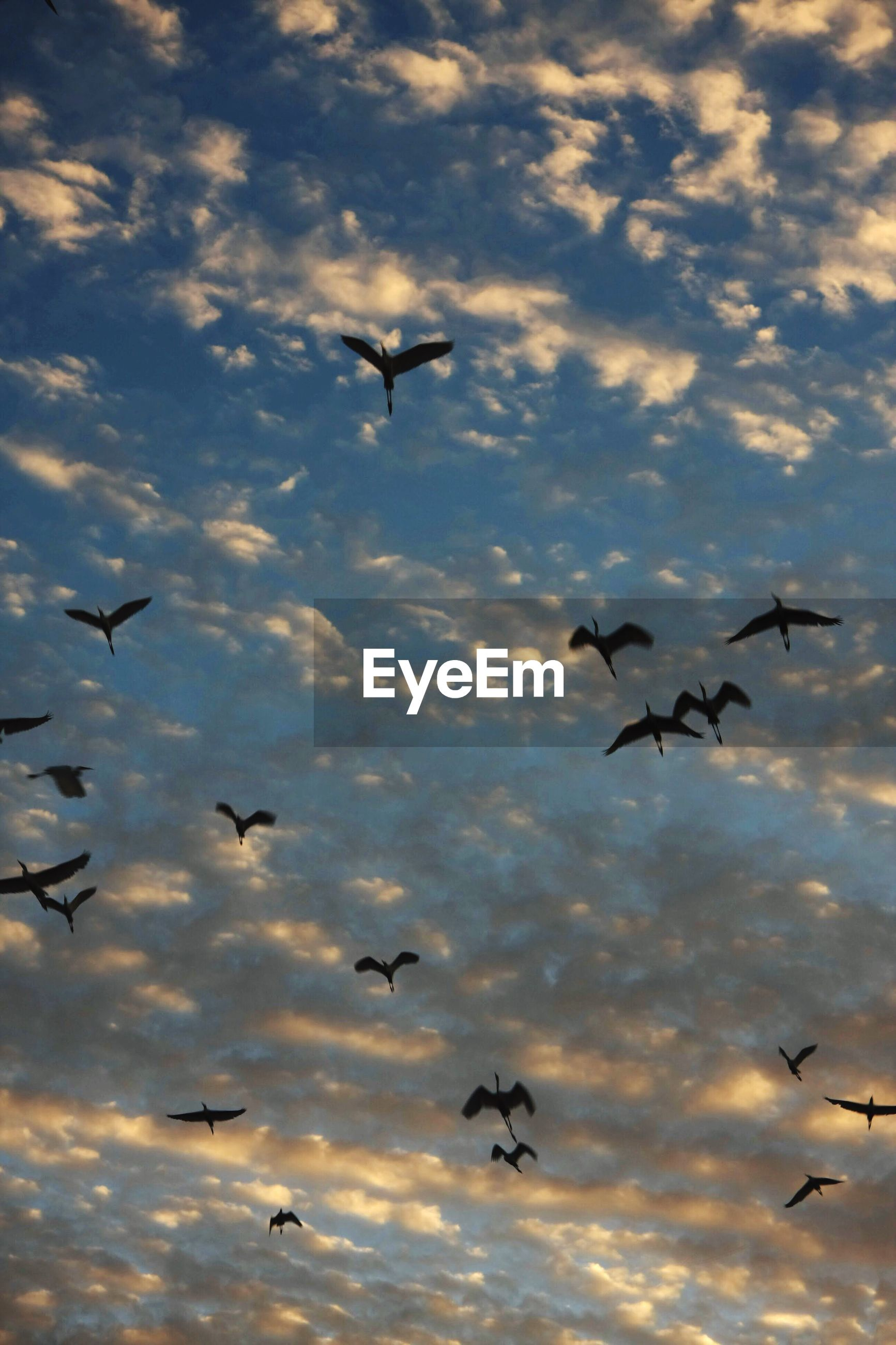 LOW ANGLE VIEW OF BIRD FLYING OVER THE SKY