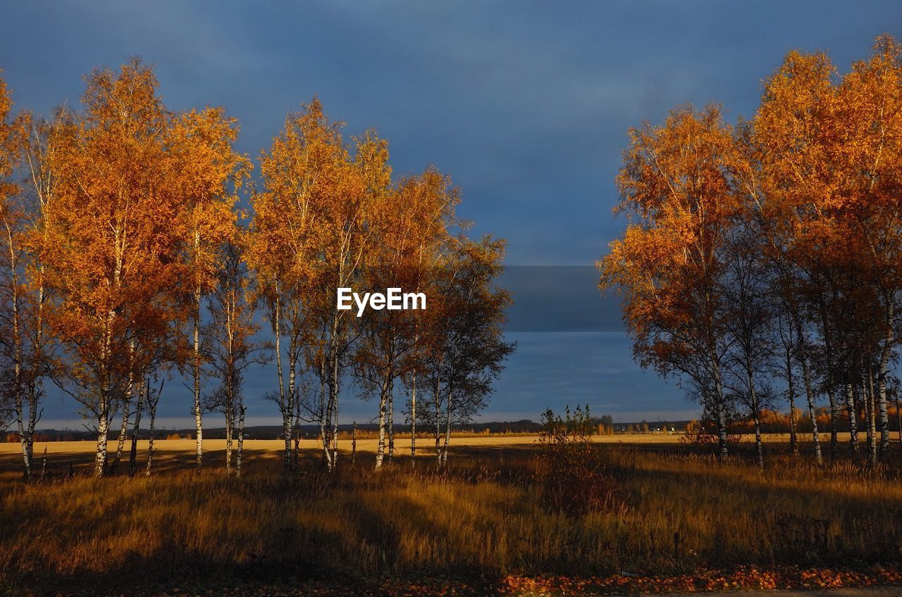 tree, plant, autumn, change, beauty in nature, sky, tranquility, scenics - nature, orange color, nature, tranquil scene, growth, non-urban scene, land, no people, field, environment, landscape, idyllic, outdoors, fall