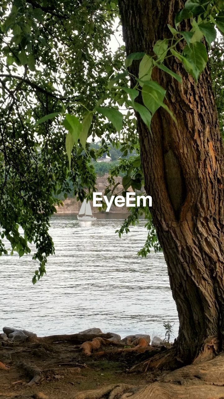 tree, water, nature, growth, tranquility, no people, tree trunk, scenics, leaf, outdoors, day, beauty in nature, sea
