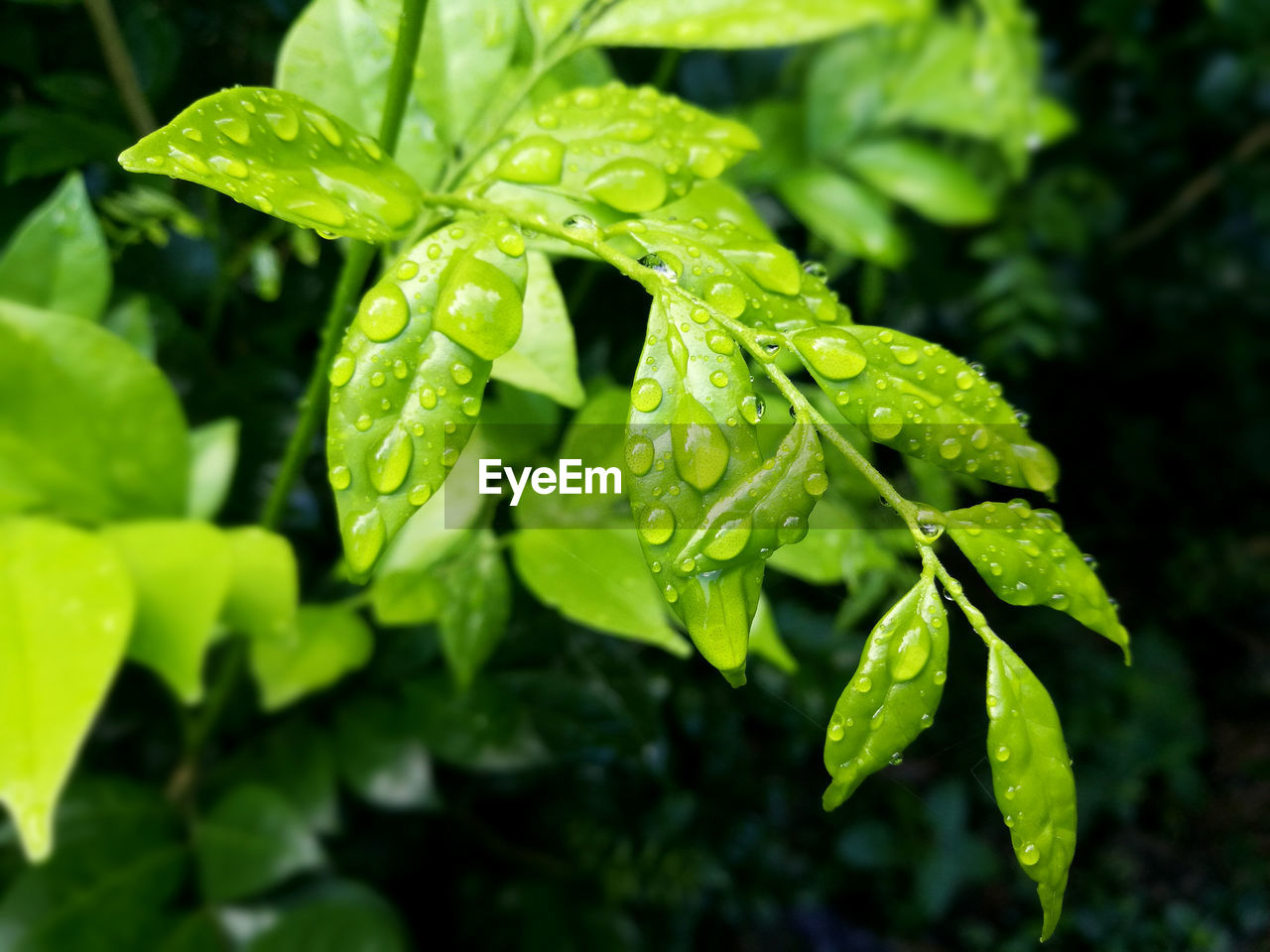 green color, growth, plant, drop, beauty in nature, close-up, leaf, plant part, wet, nature, freshness, water, no people, focus on foreground, day, dew, outdoors, rain, raindrop, leaves, rainy season, purity