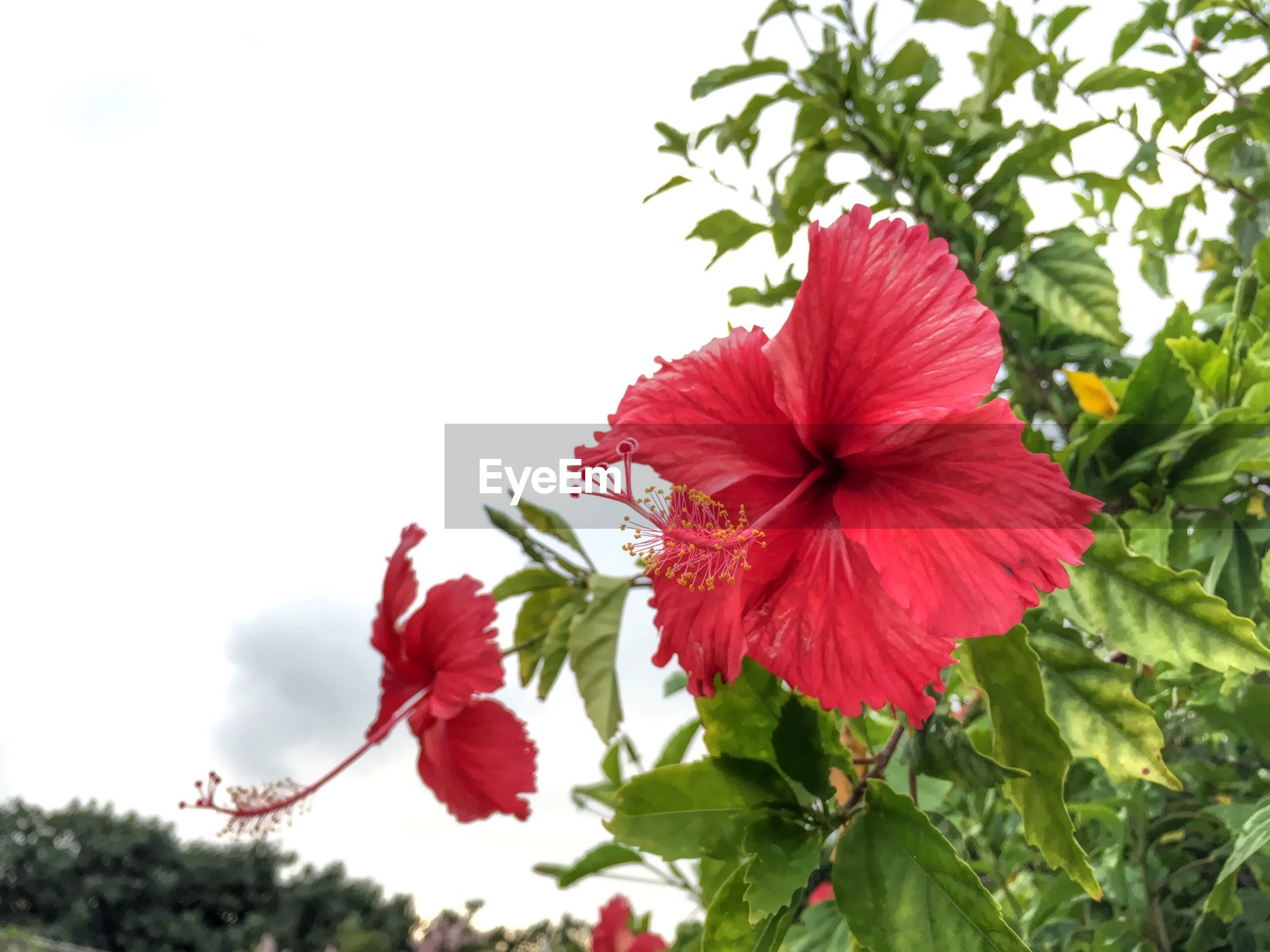 flower, freshness, petal, growth, fragility, red, flower head, beauty in nature, leaf, nature, plant, blooming, close-up, in bloom, focus on foreground, blossom, day, low angle view, green color, stem