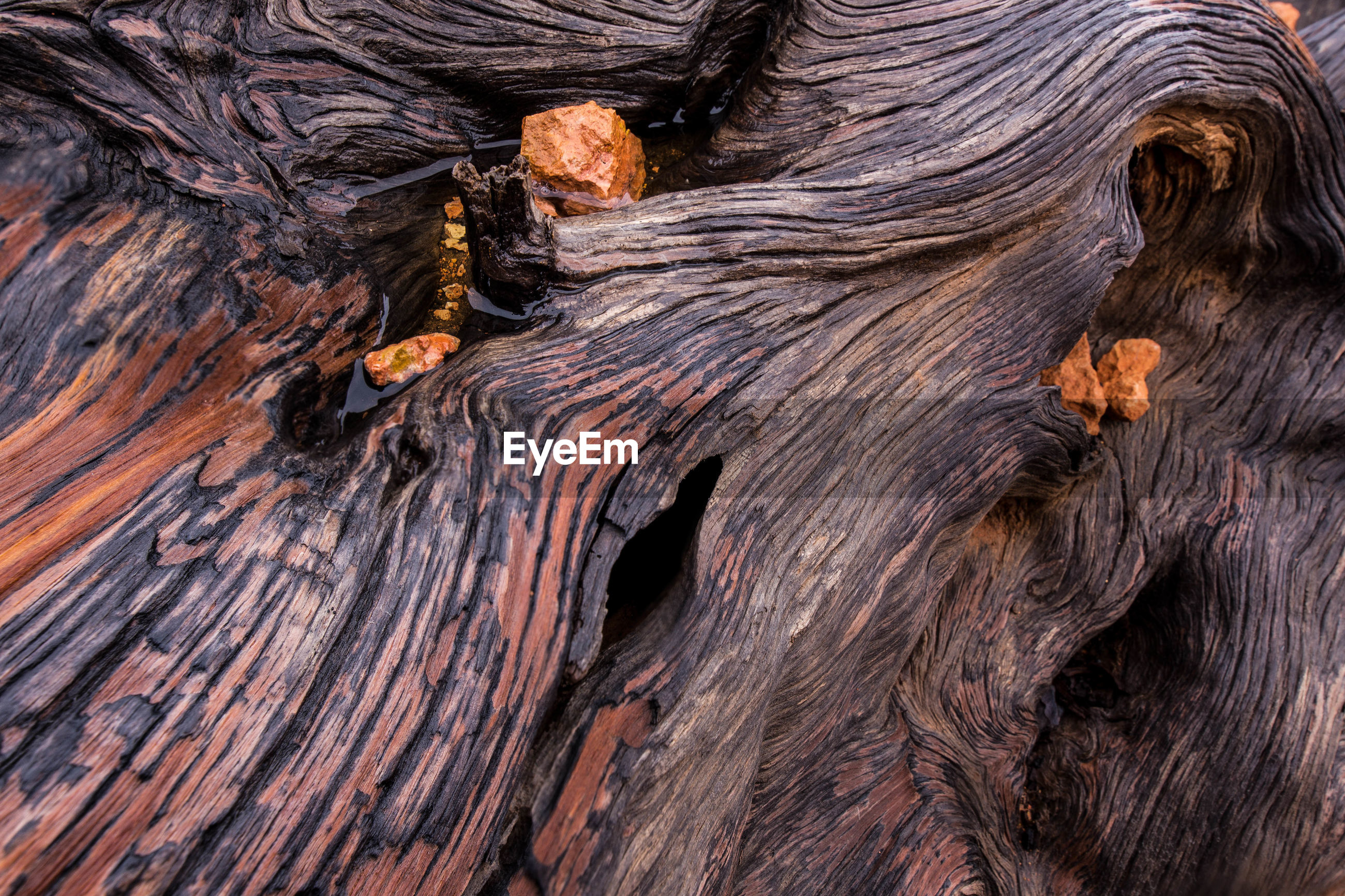 Full frame shot of tree trunk