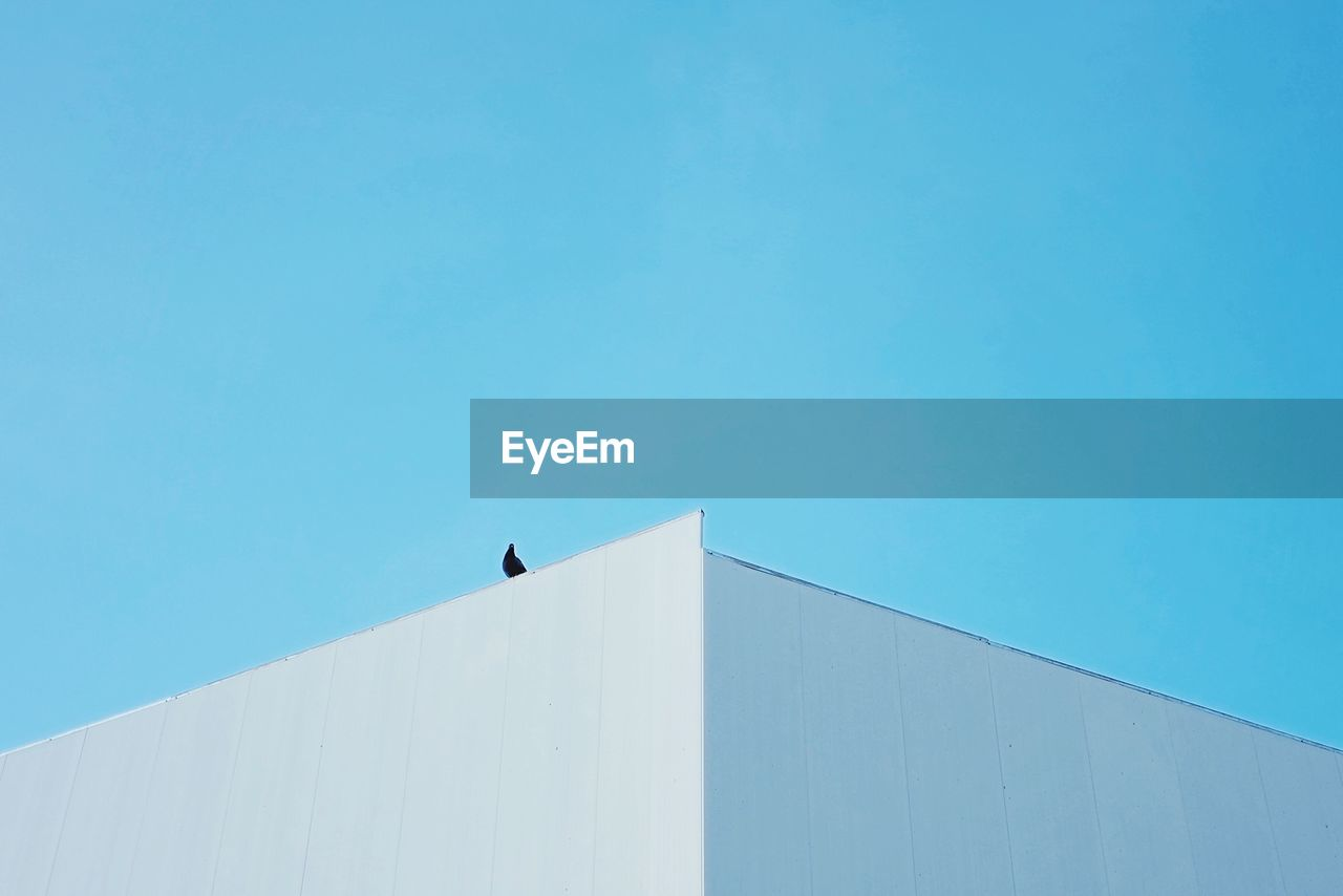 copy space, architecture, clear sky, day, outdoors, built structure, blue, low angle view, animal themes, building exterior, bird, no people