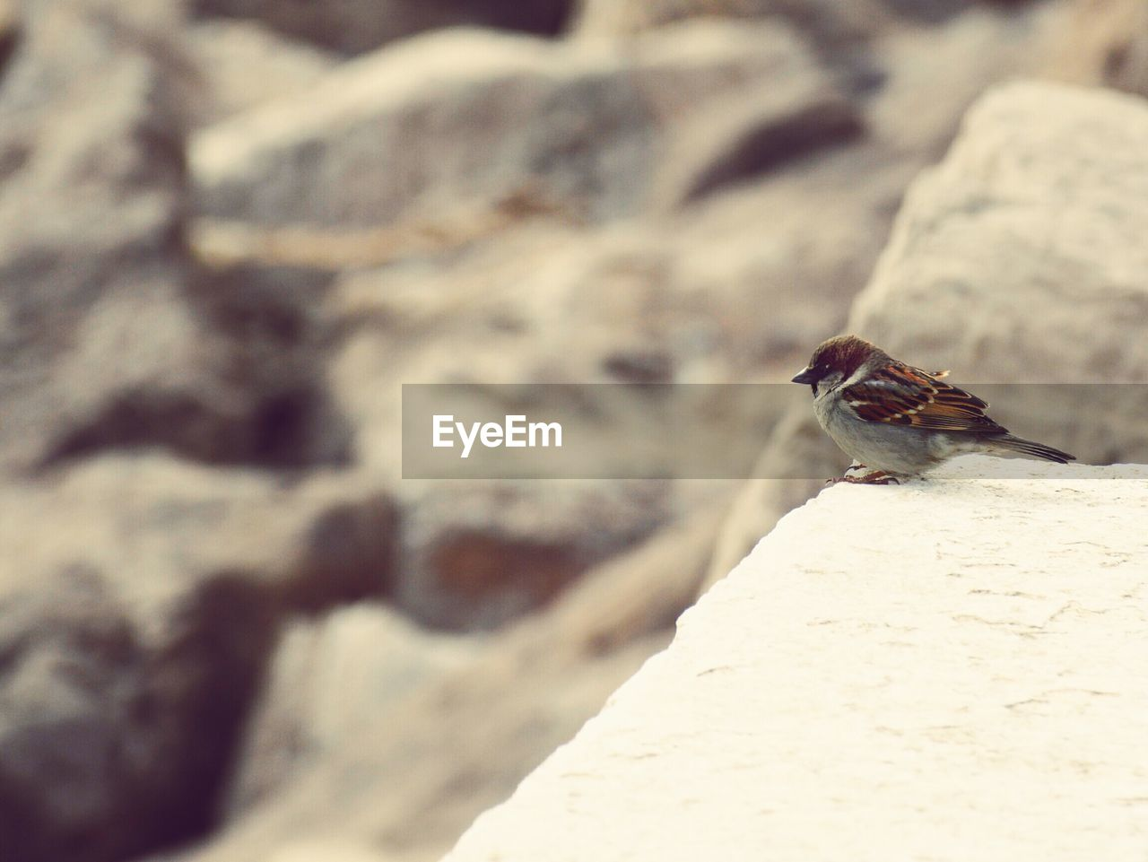 one animal, animals in the wild, animal themes, insect, animal wildlife, rock - object, selective focus, day, close-up, outdoors, no people, focus on foreground, nature, perching
