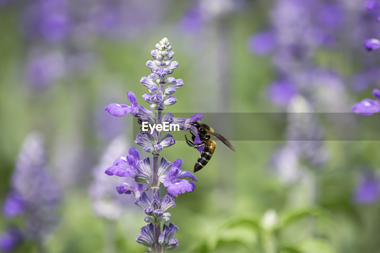 flowering plant, flower, plant, fragility, beauty in nature, freshness, vulnerability, animal themes, growth, invertebrate, insect, animal, one animal, petal, animal wildlife, animals in the wild, purple, flower head, close-up, focus on foreground, pollination, no people, lavender, butterfly - insect