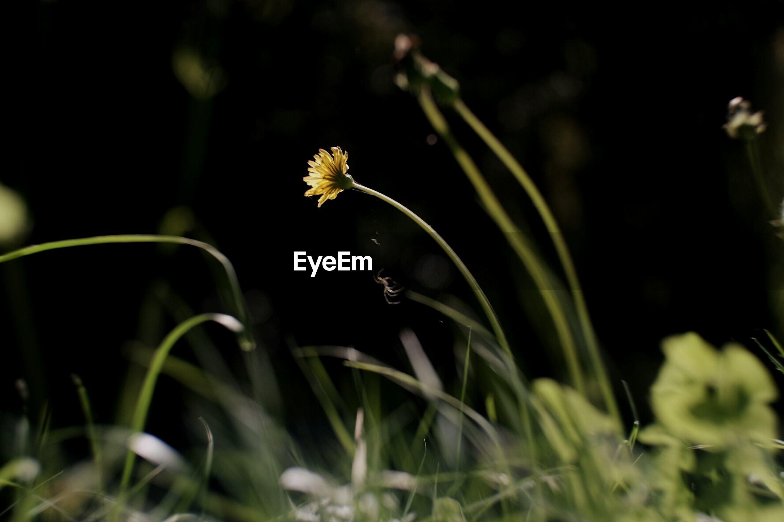 Spider on flower plant