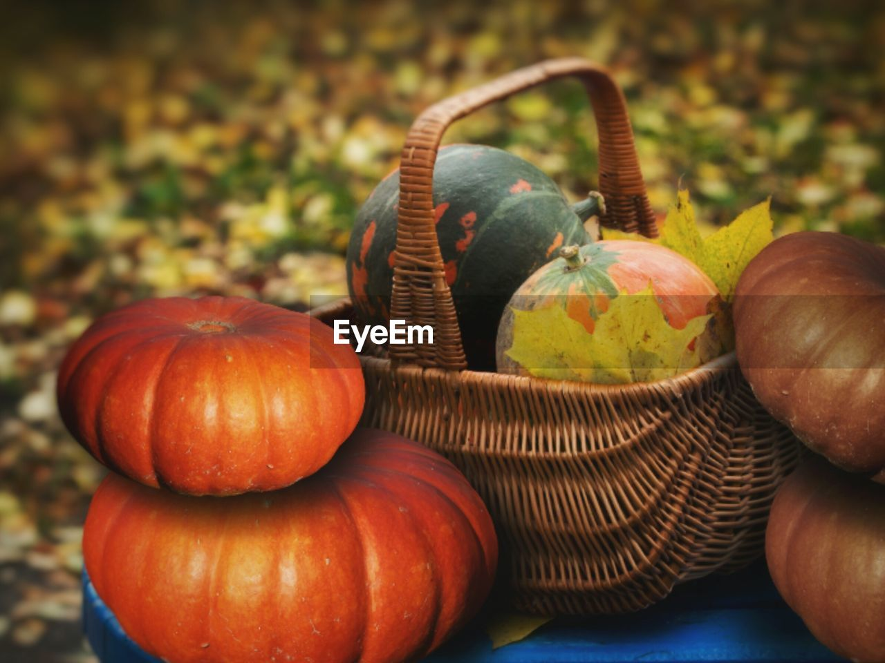 food and drink, food, healthy eating, vegetable, wellbeing, still life, freshness, no people, focus on foreground, close-up, pumpkin, fruit, table, autumn, basket, container, orange color, day, nature, indoors