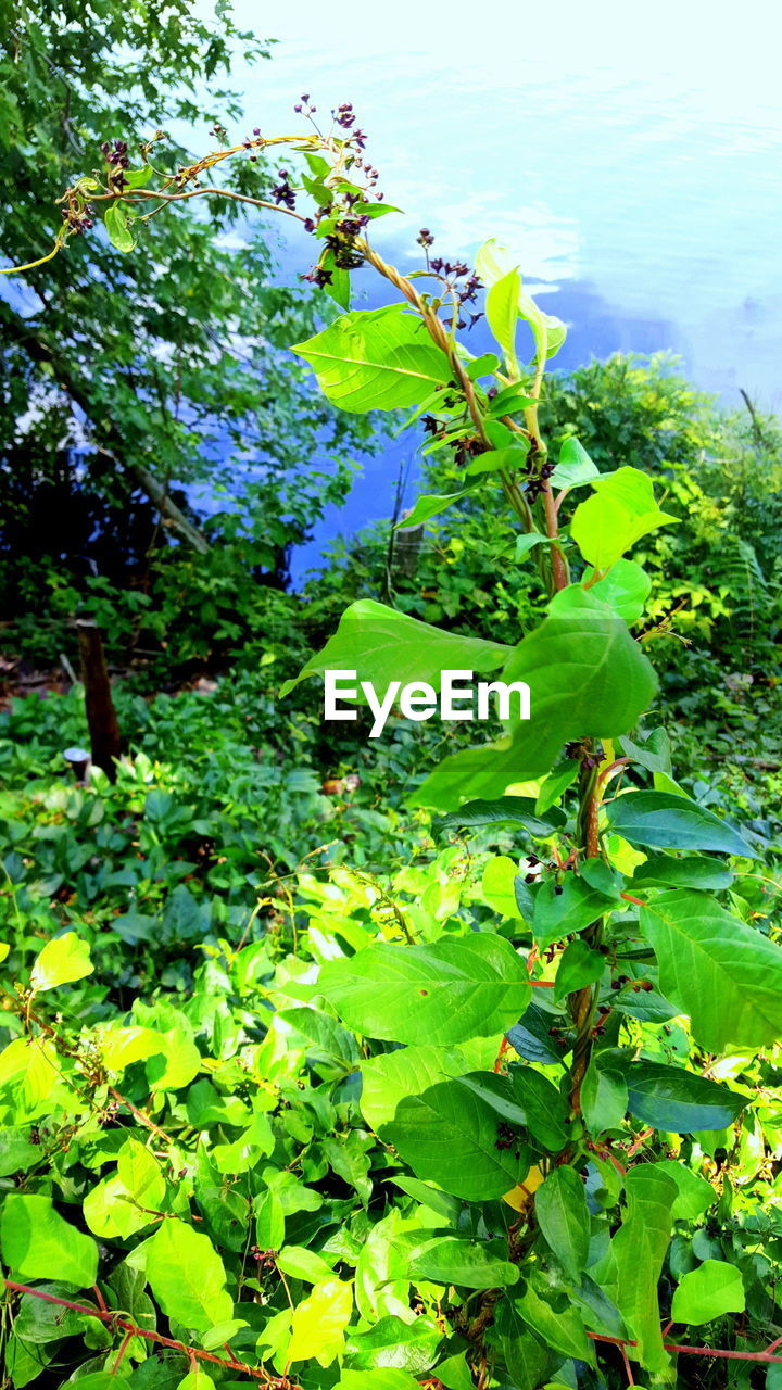 growth, plant, nature, green color, leaf, beauty in nature, no people, outdoors, day, fragility, freshness, tree, flower, close-up