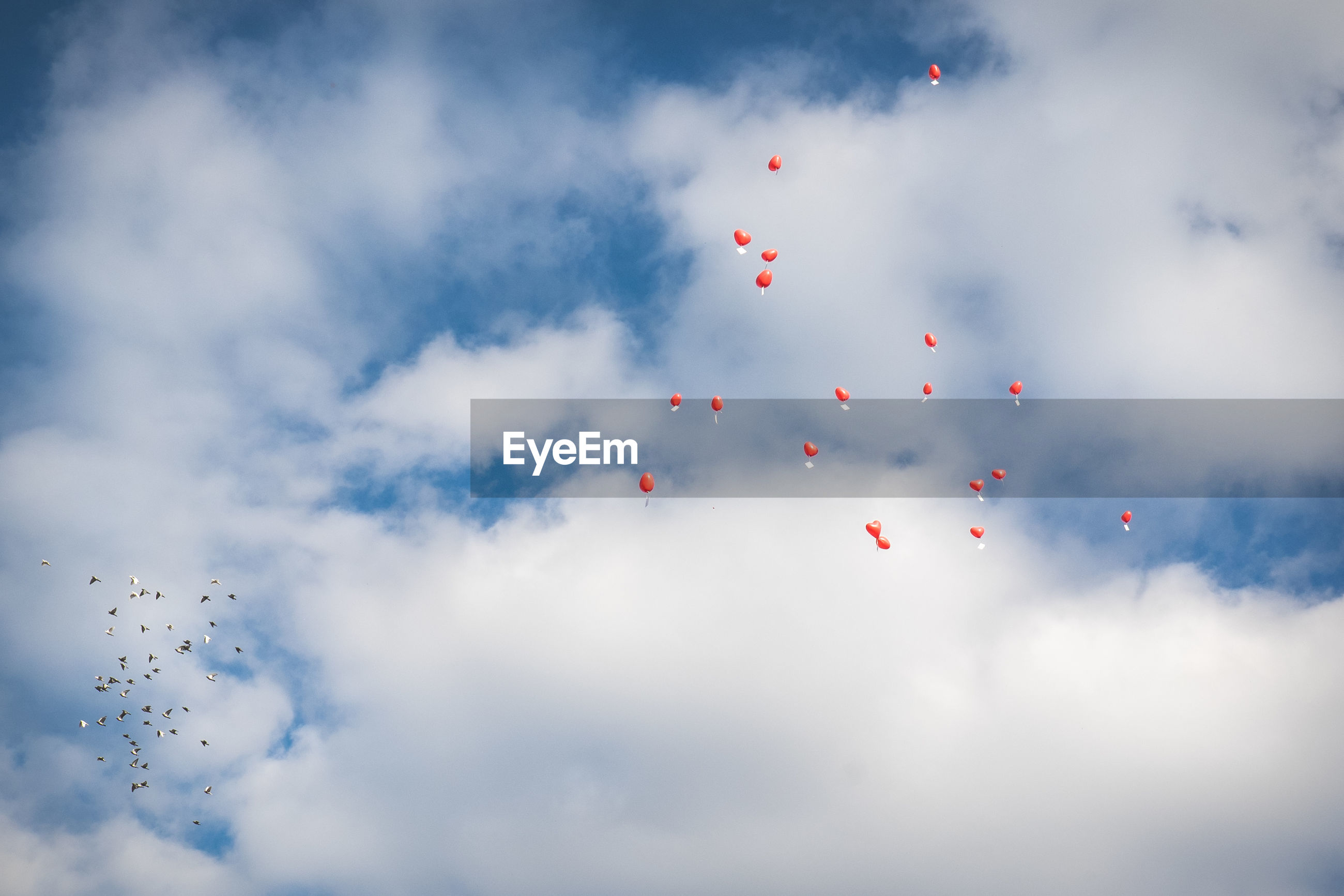 Low angle view of balloons in sky